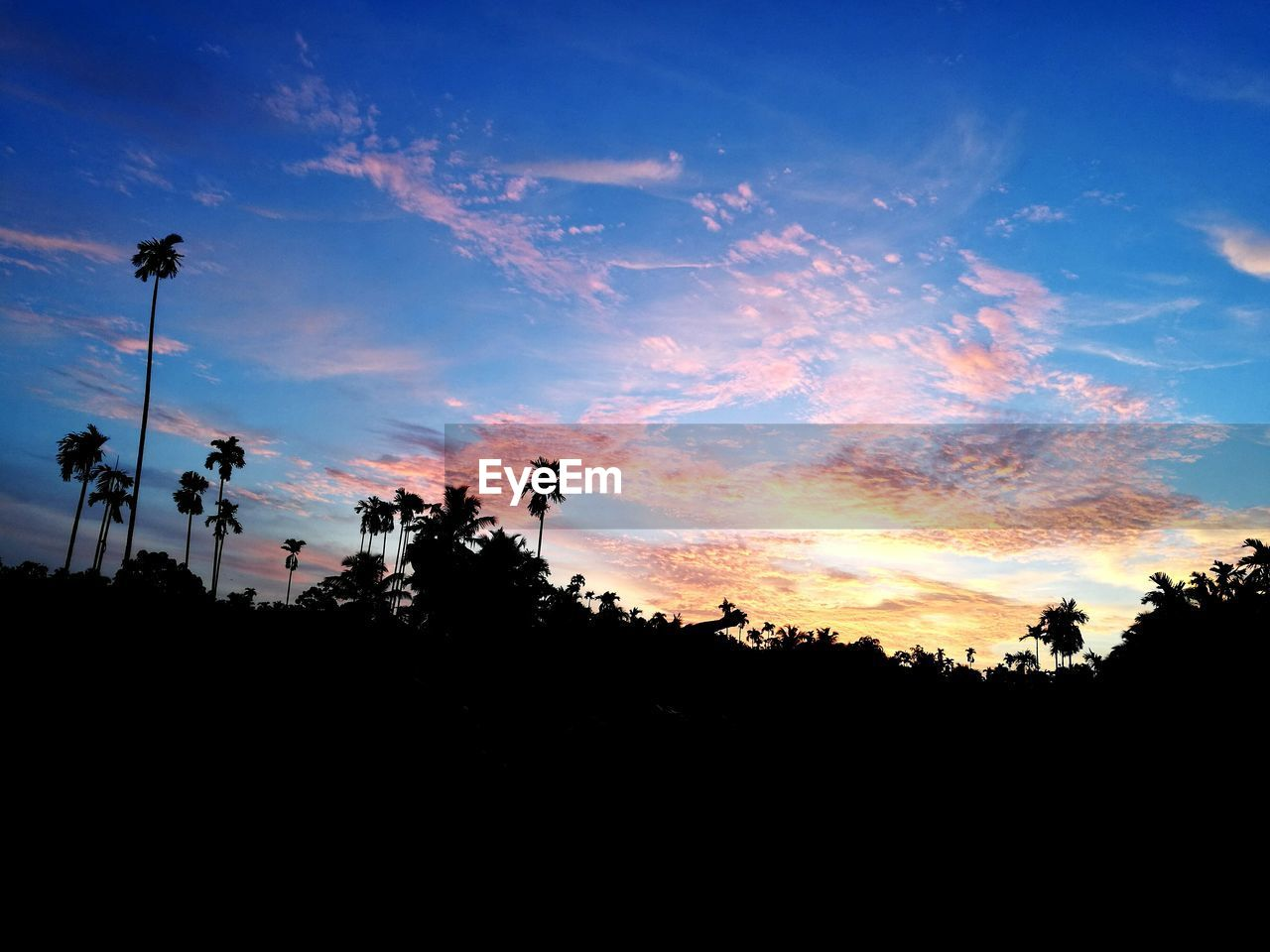 silhouette, sunset, tree, sky, nature, beauty in nature, tranquility, outdoors, scenics, tranquil scene, low angle view, no people, palm tree, growth, day