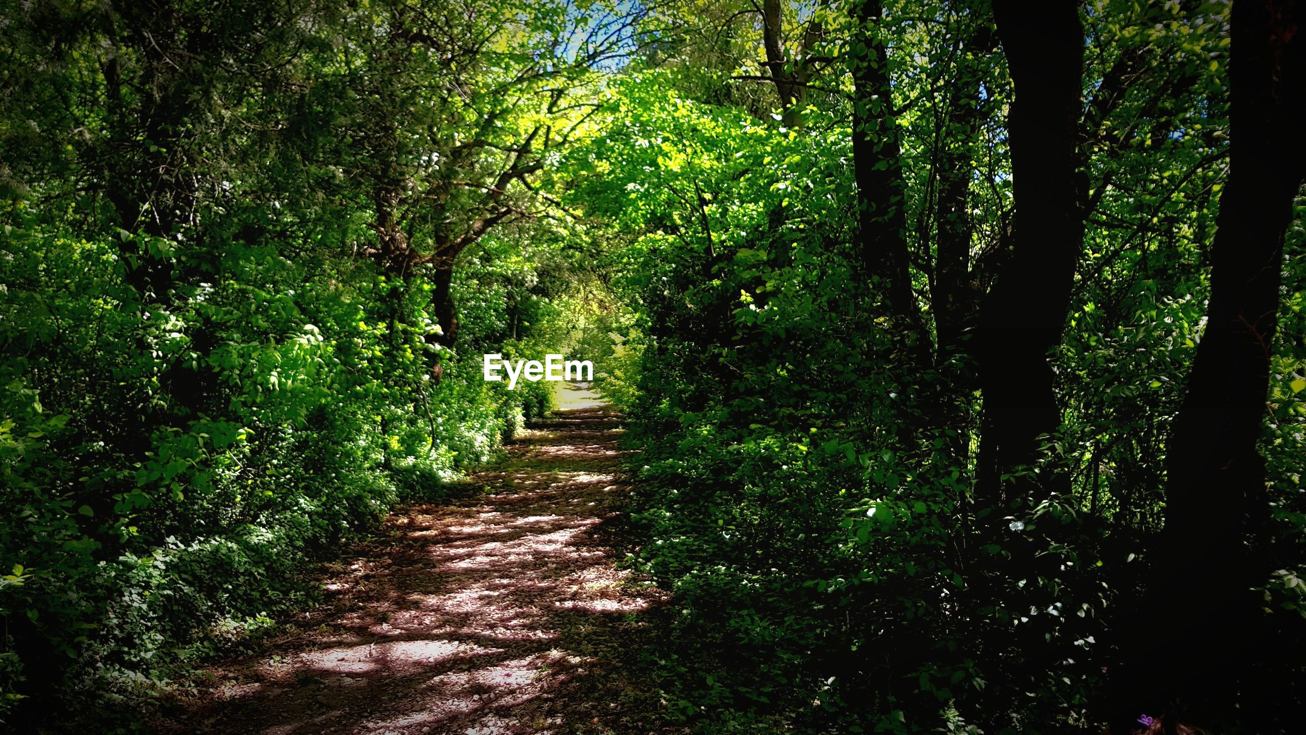 FOOTPATH ALONG TREES IN FOREST