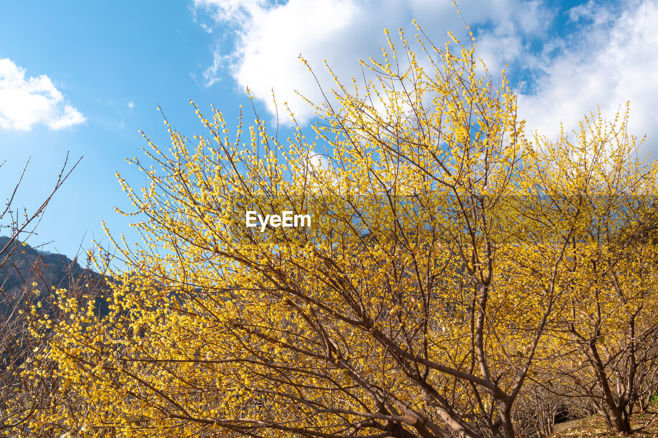 sky, tree, low angle view, plant, cloud - sky, autumn, beauty in nature, nature, yellow, growth, change, day, branch, no people, tranquility, sunlight, outdoors, scenics - nature, flower, freshness