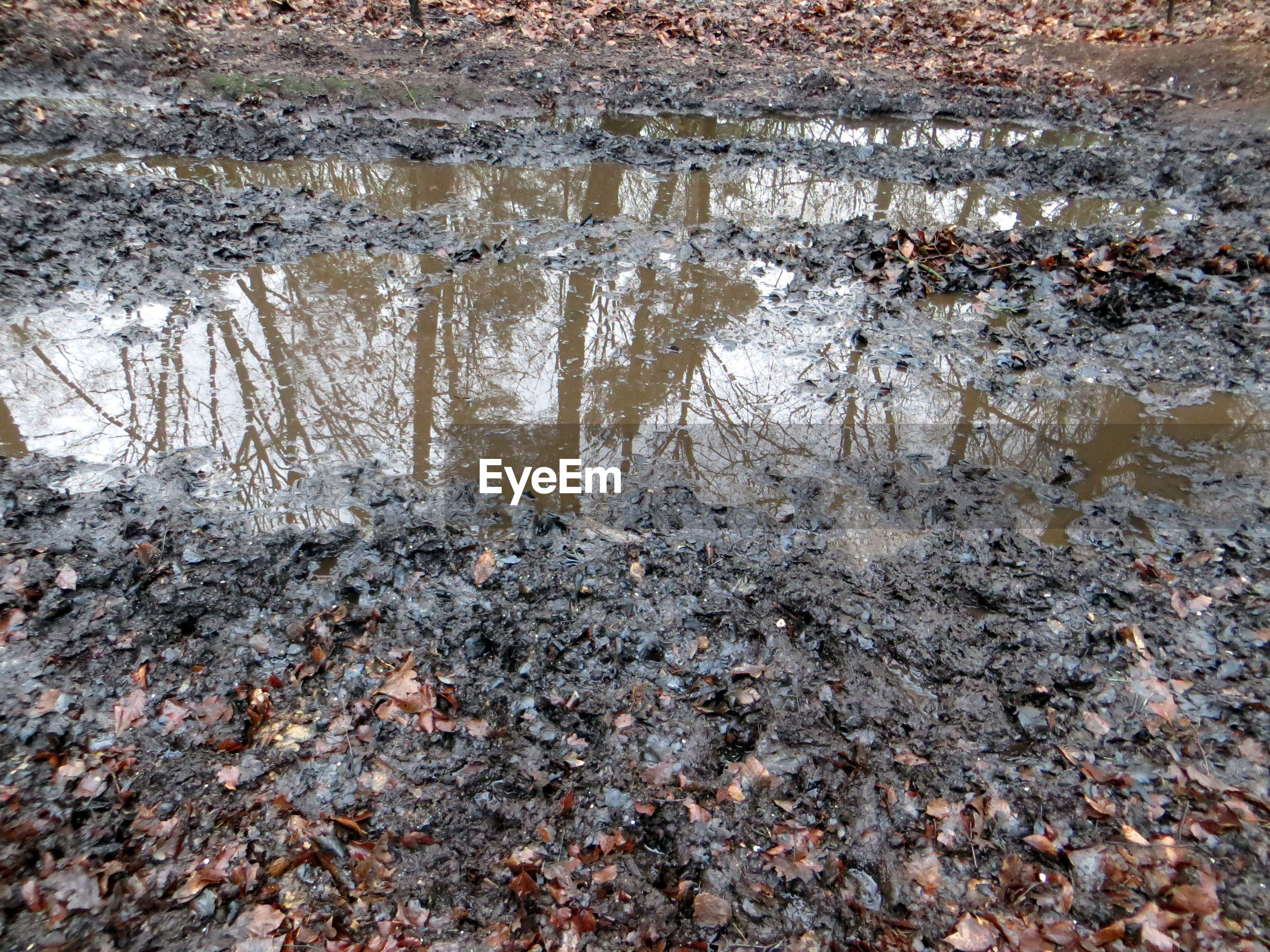 Reflection of trees in dirty puddle
