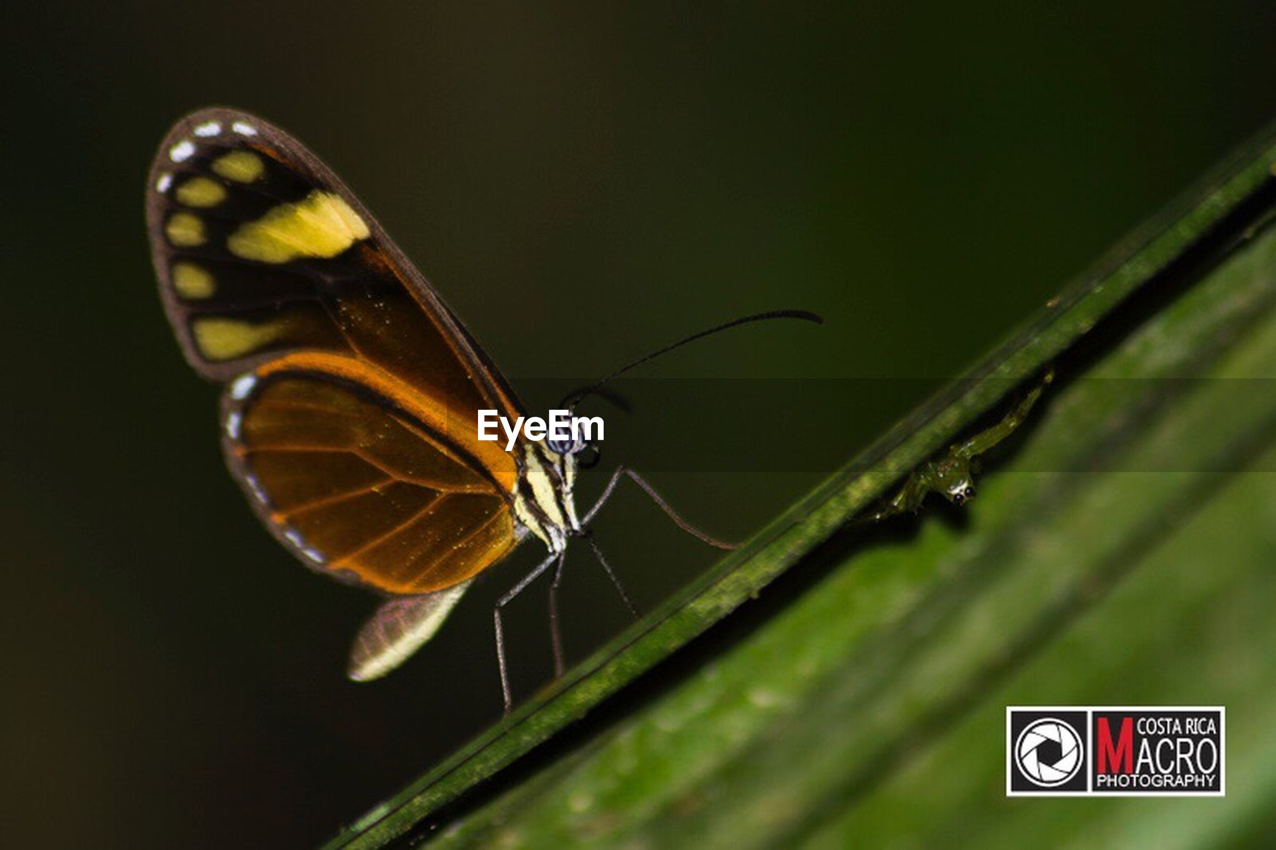 insect, close-up, one animal, nature, animal themes, no people, animals in the wild, butterfly - insect, beauty in nature, outdoors, day, perching