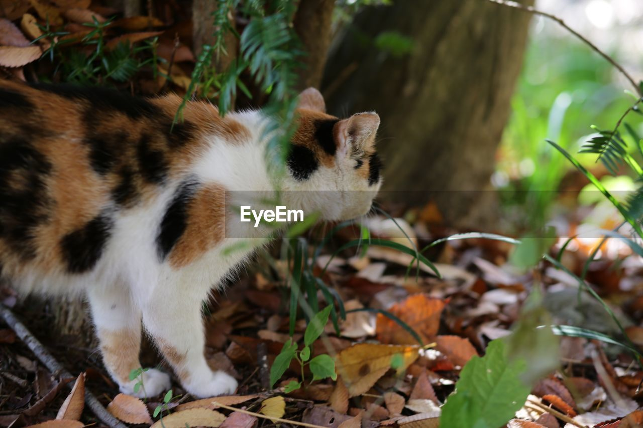 mammal, animal themes, animal, one animal, leaf, plant part, vertebrate, pets, domestic animals, domestic, no people, nature, animal wildlife, feline, day, land, plant, animals in the wild, field, cat, whisker