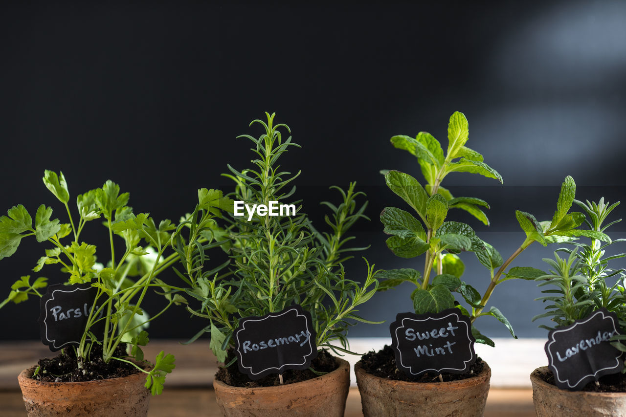 growth, plant, potted plant, leaf, green color, plant part, nature, text, beginnings, no people, botany, beauty in nature, seedling, new life, close-up, container, focus on foreground, outdoors, gardening, western script, flower pot, herb, black background, planting, plant nursery