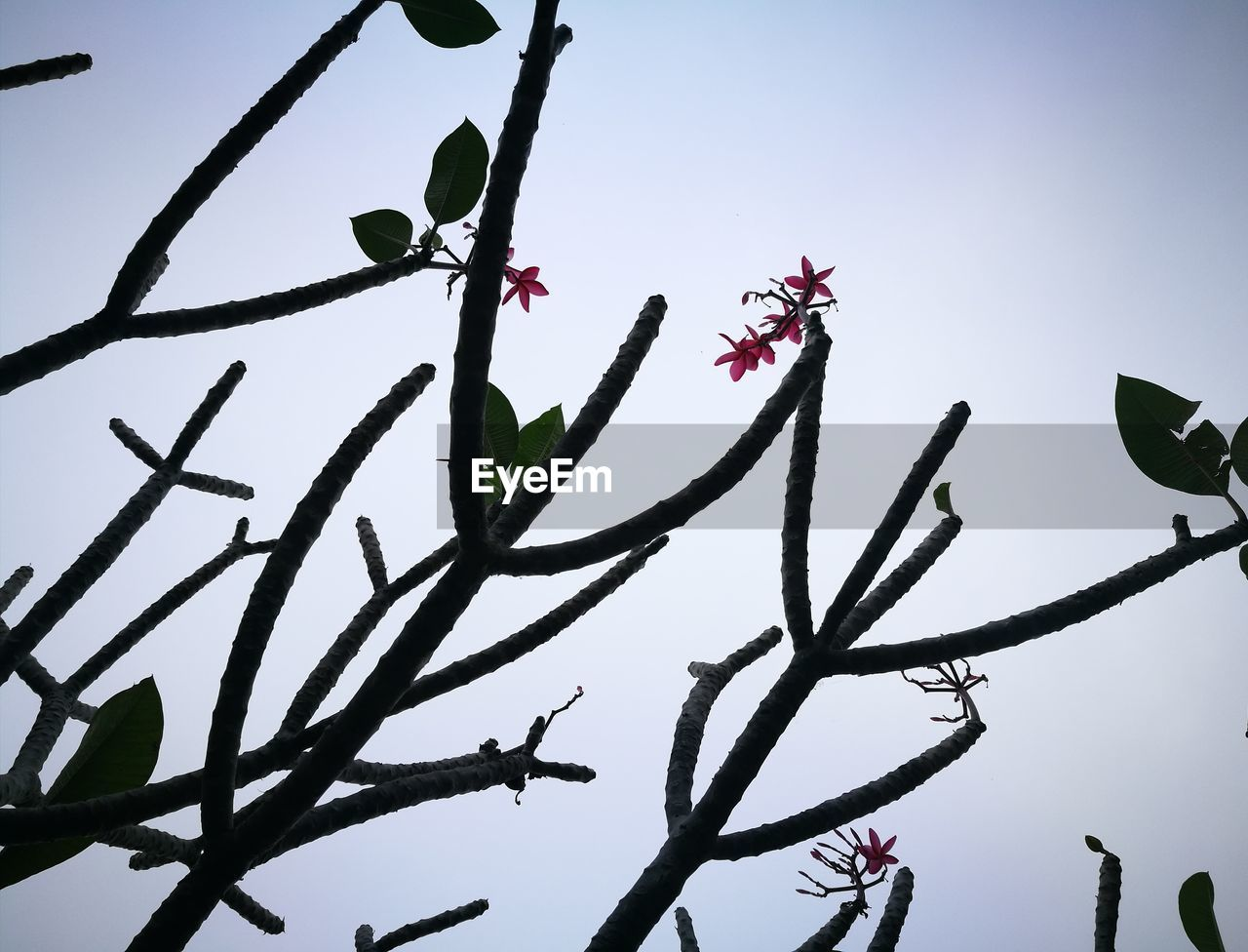 low angle view, growth, tree, branch, flower, nature, beauty in nature, day, outdoors, no people, sky, clear sky, leaf, freshness, fragility, close-up