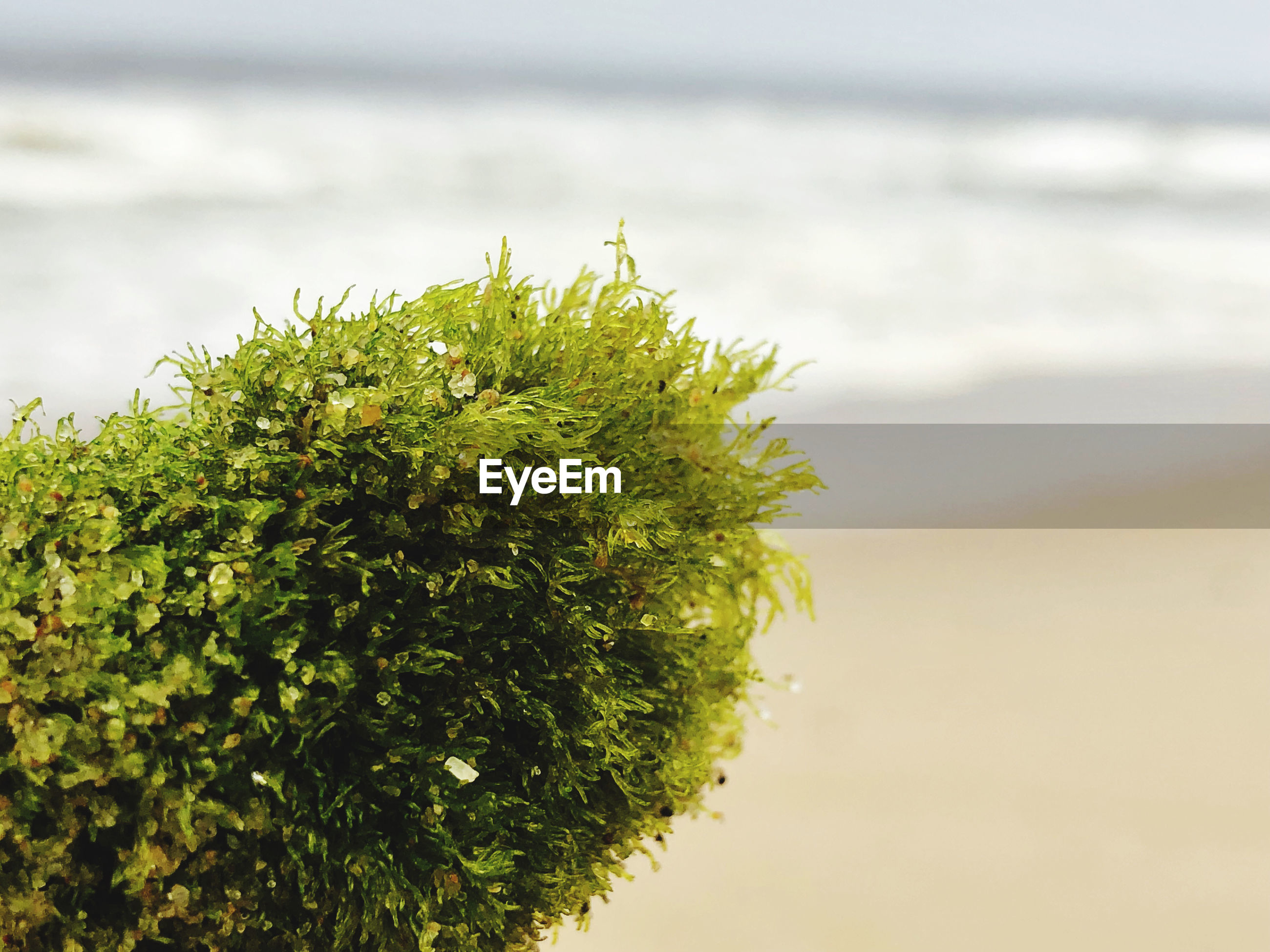 Close-up of plant on beach against sea