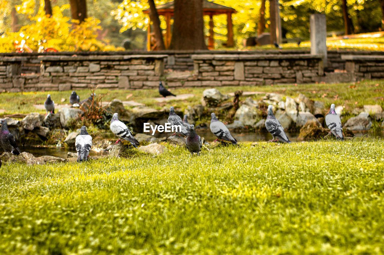 FLOCK OF BIRDS ON A FIELD