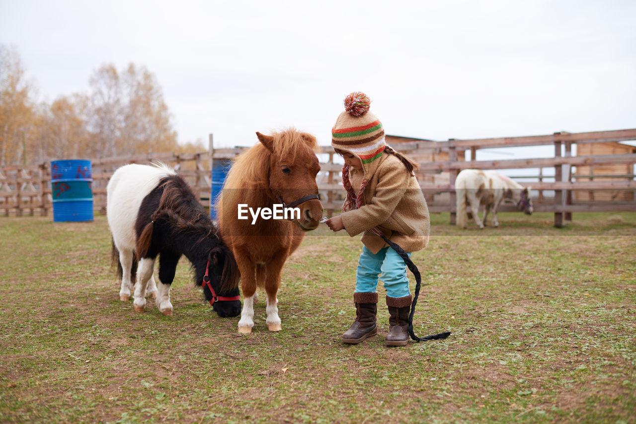 HORSES STANDING IN FIELD