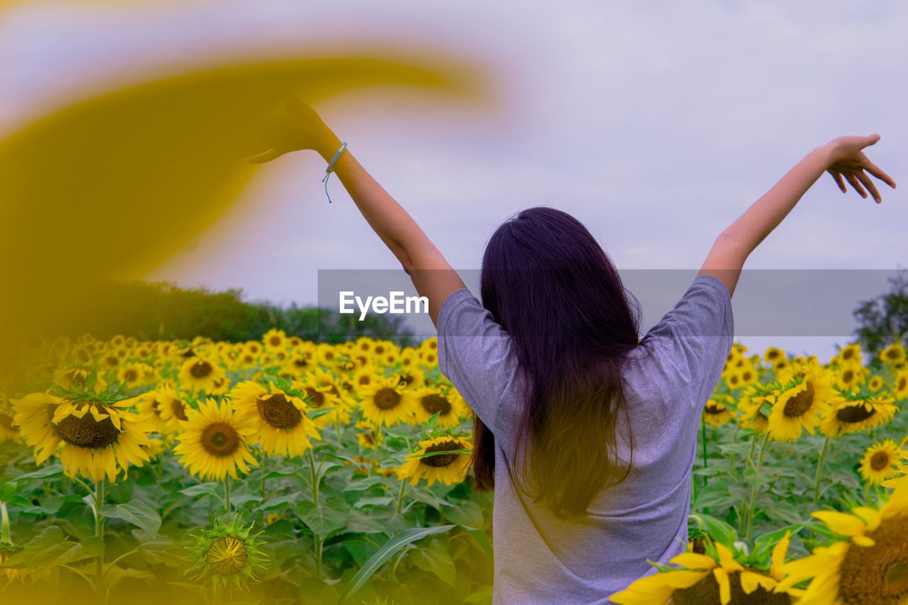 Rear view of woman with arms raised standing amidst sunflowers