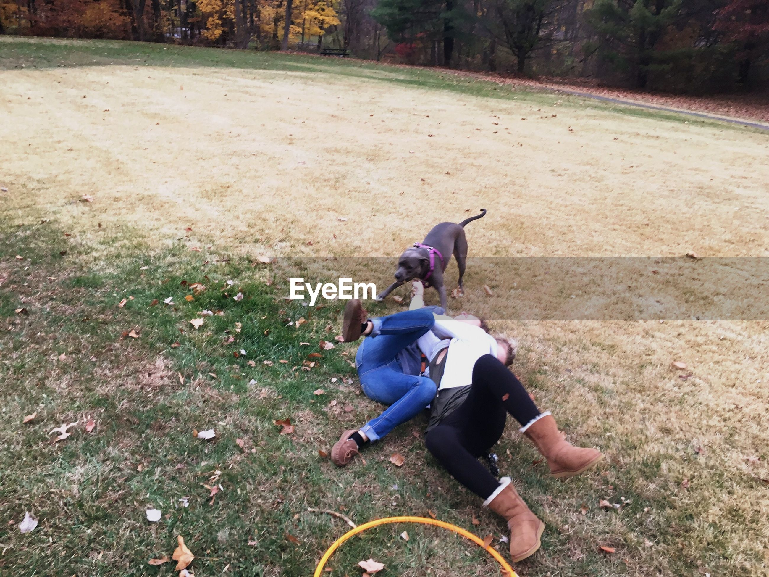 High angle view of playful couple with dog on field