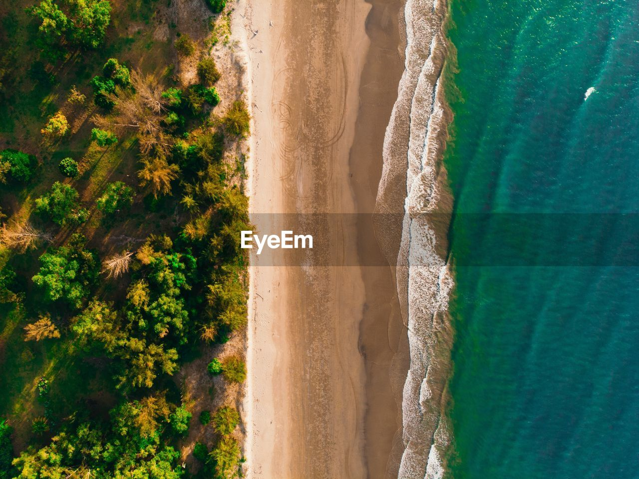 land, scenics - nature, plant, sand, green color, nature, beach, day, water, no people, tree, beauty in nature, outdoors, tranquil scene, sea, environment, tranquility, landscape, motion, arid climate