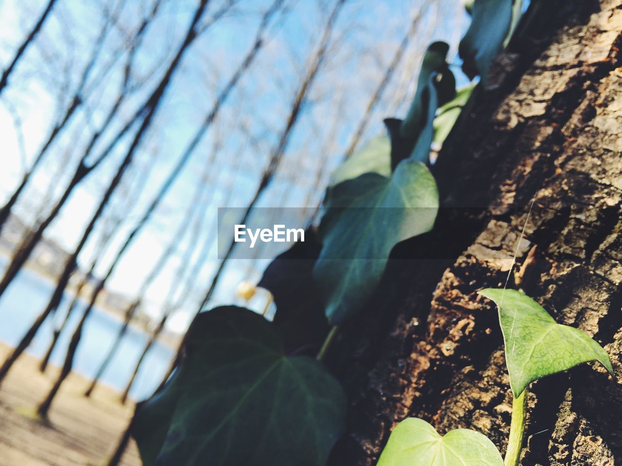 leaf, day, nature, outdoors, plant, growth, close-up, beauty in nature, no people, freshness