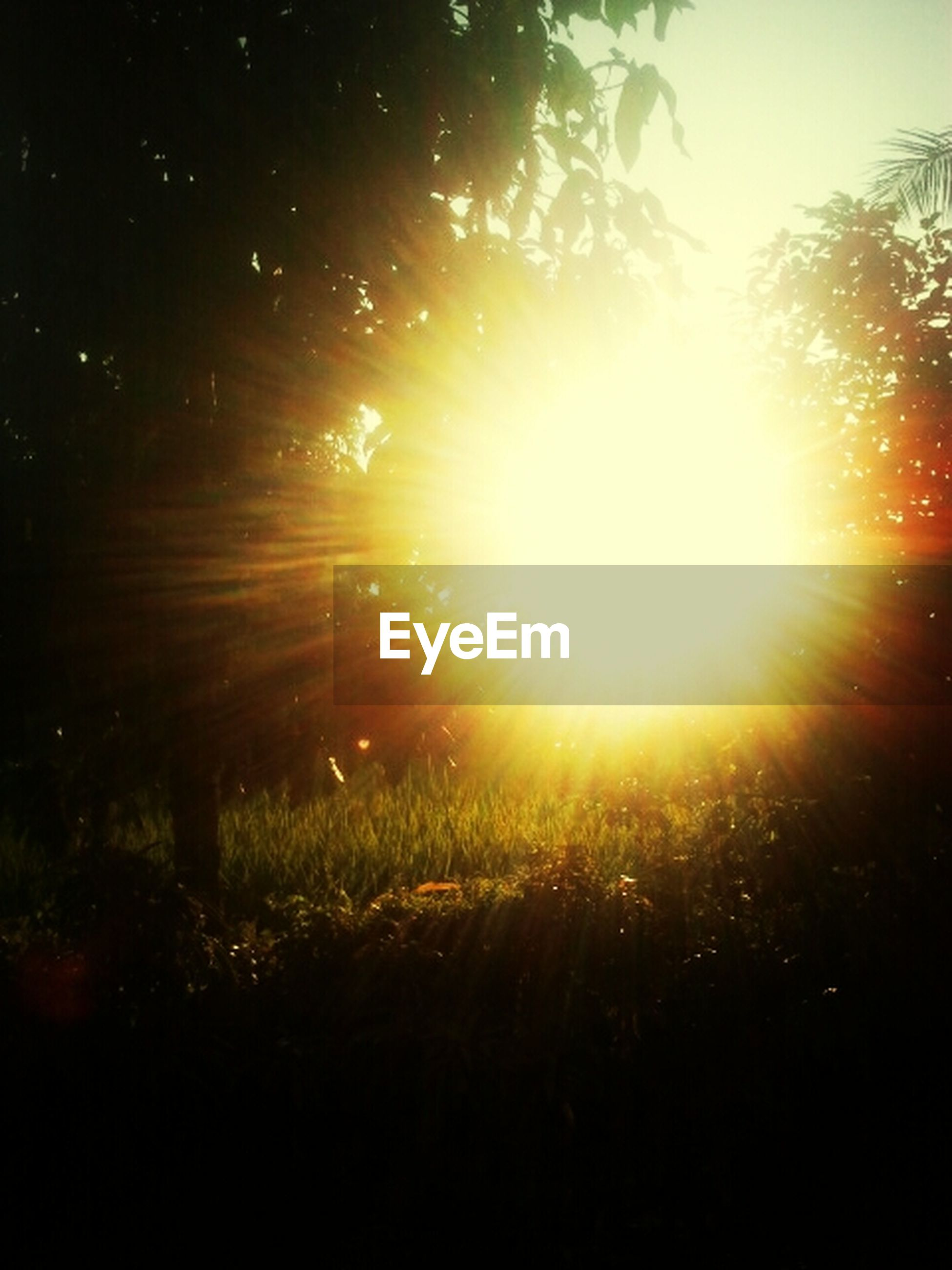 sun, sunbeam, sunlight, tree, lens flare, tranquility, growth, tranquil scene, beauty in nature, nature, scenics, bright, back lit, sunset, silhouette, sunny, sky, field, branch, landscape