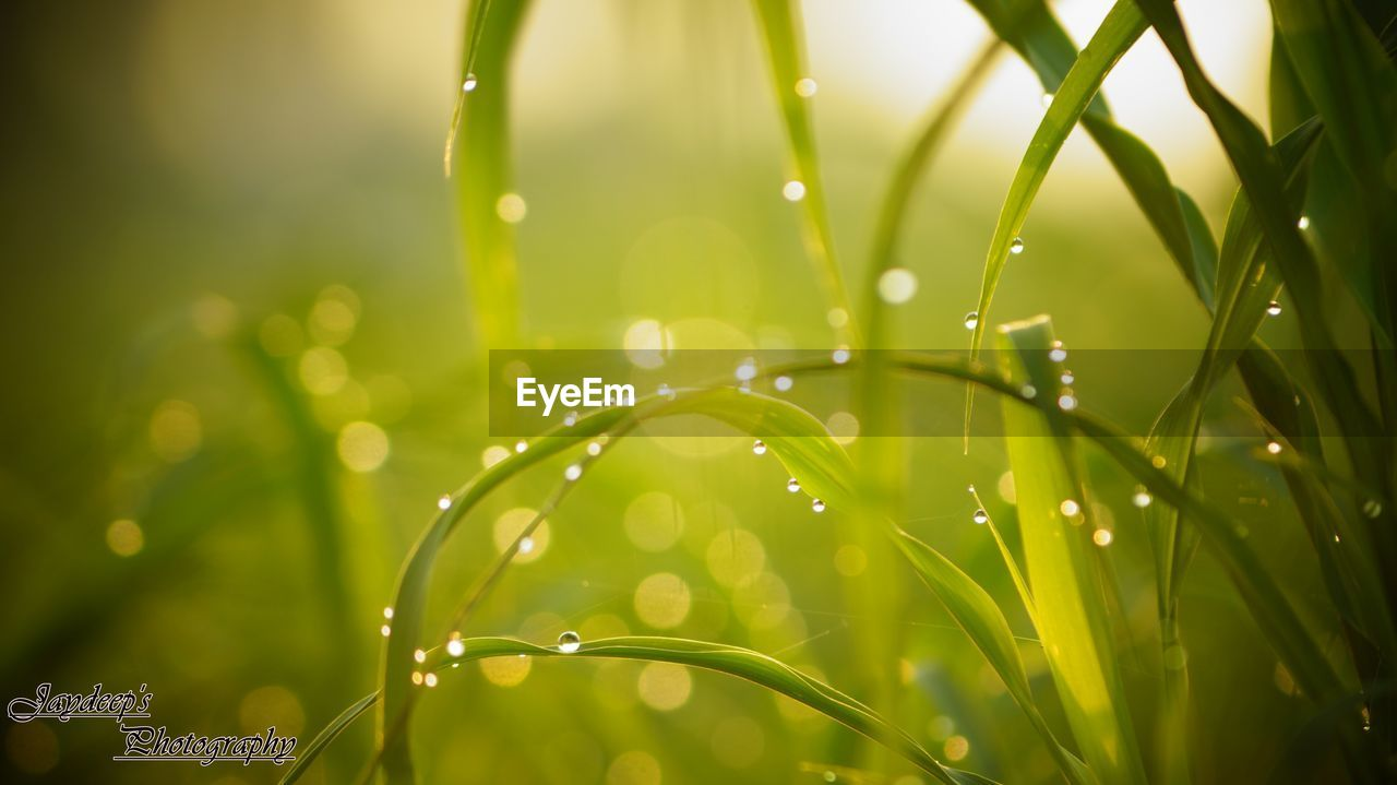 drop, green color, water, wet, nature, growth, beauty in nature, freshness, raindrop, close-up, focus on foreground, fragility, plant, no people, grass, outdoors, leaf, day
