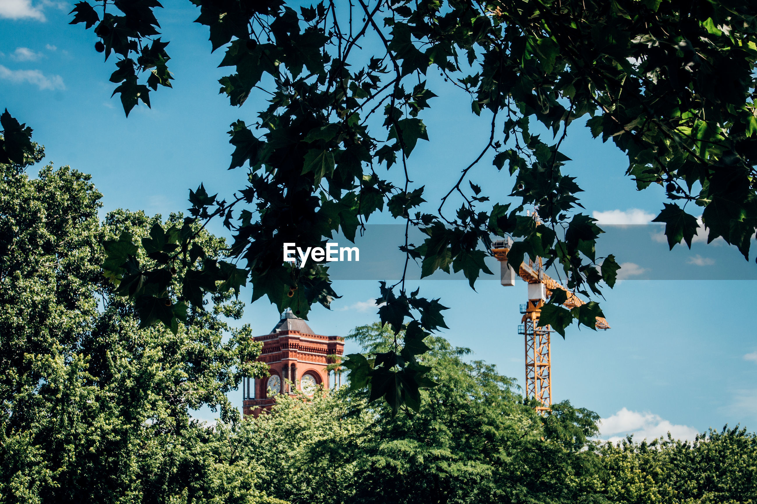 Low angle view of crane and clock tower against sky seen through trees