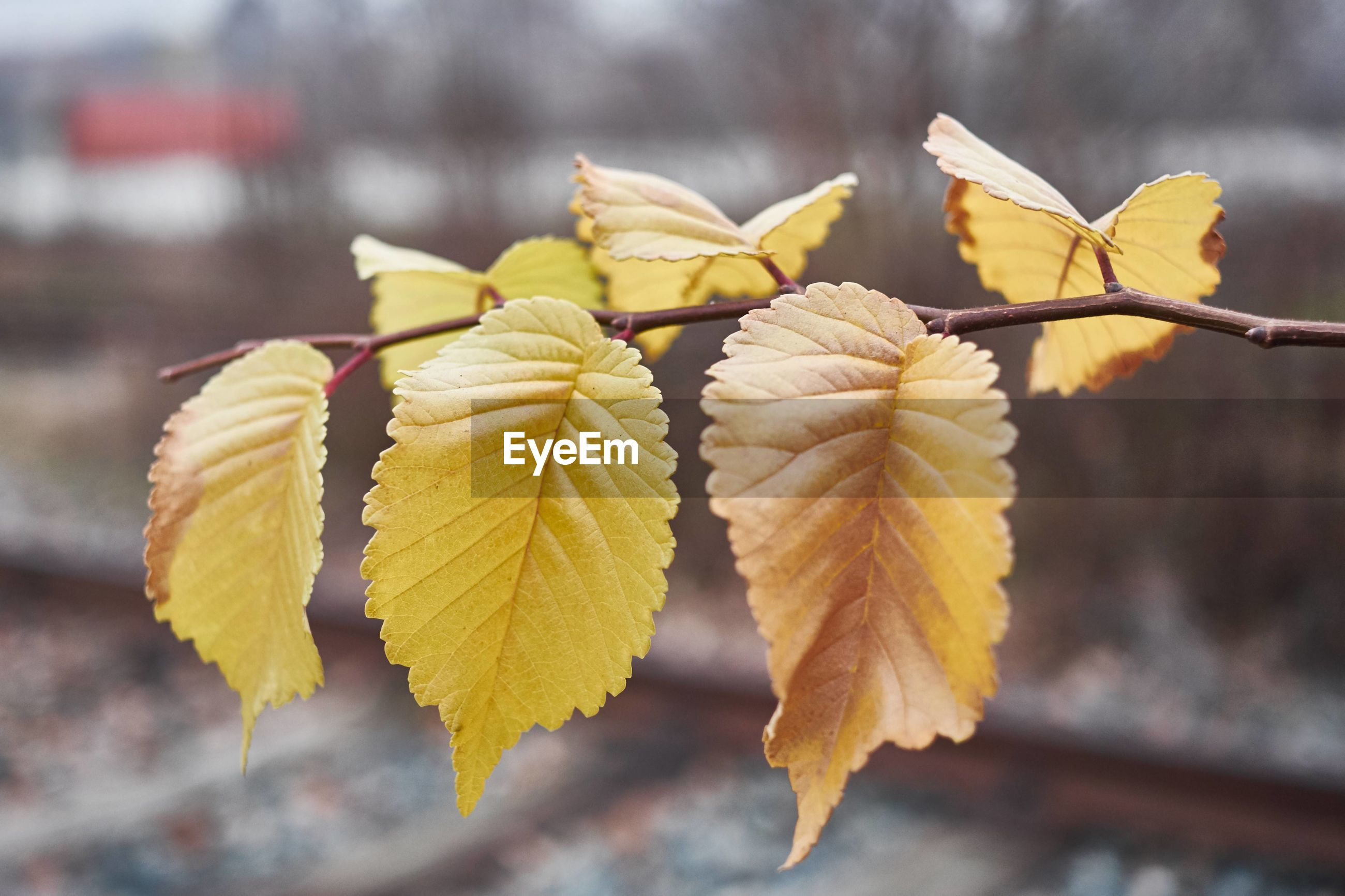 nature, close-up, focus on foreground, beauty in nature, growth, plant, yellow, outdoors, leaf, day, no people, tree