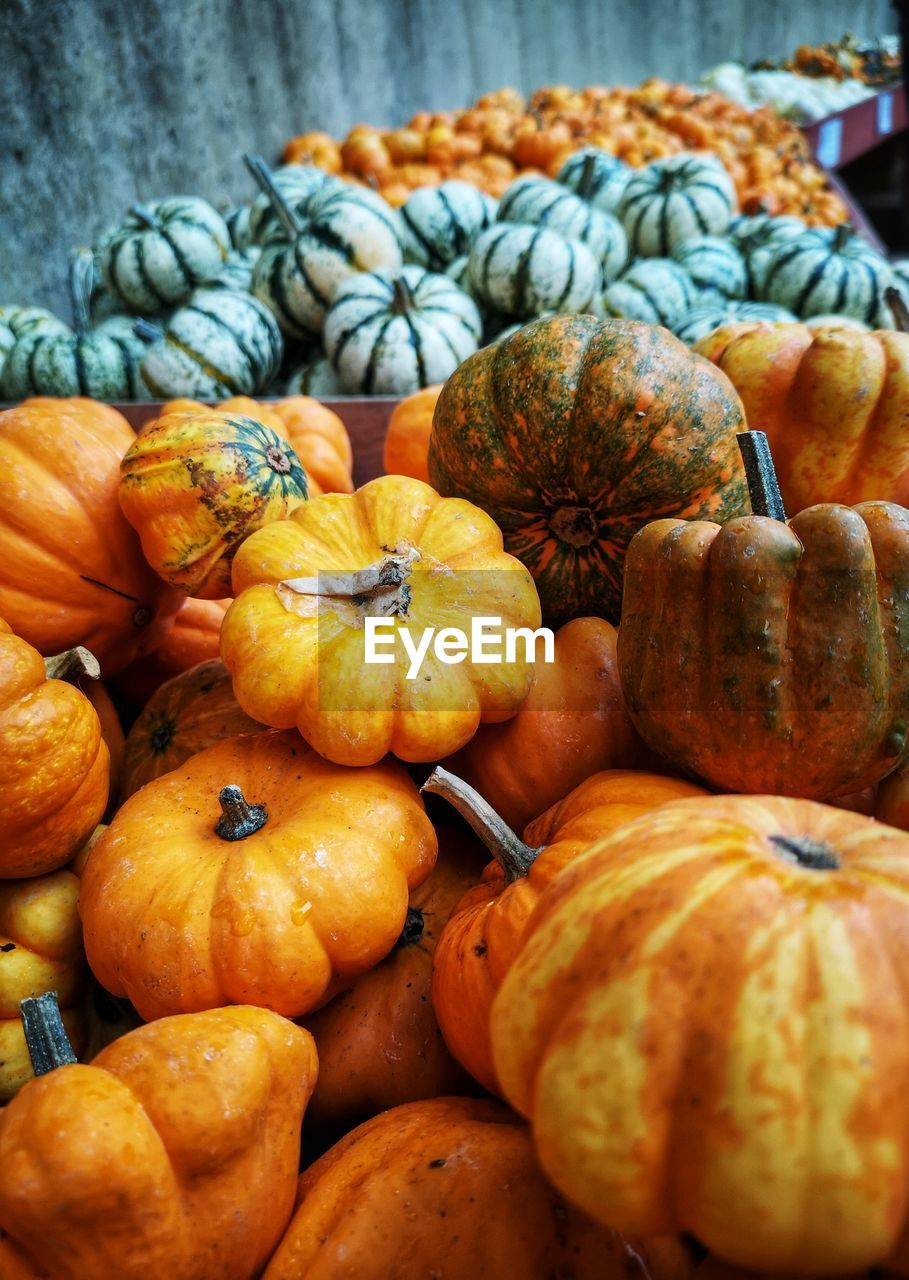 food and drink, food, healthy eating, freshness, wellbeing, pumpkin, orange color, vegetable, market, for sale, large group of objects, still life, close-up, no people, market stall, retail, day, fruit, choice, selective focus, outdoors, sale, retail display