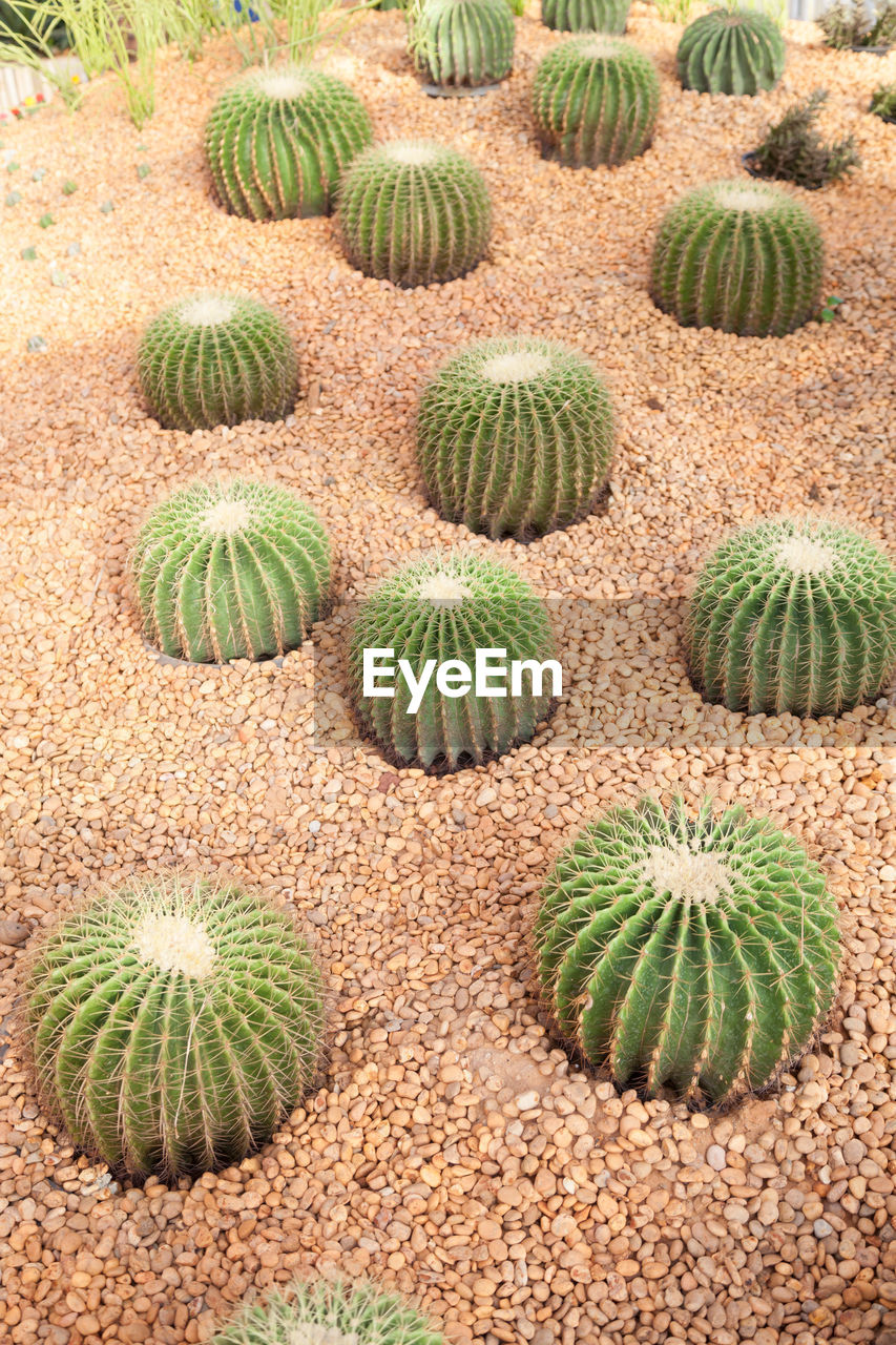 cactus, thorn, growth, spiked, no people, outdoors, plant, day, nature, prickly pear cactus, close-up