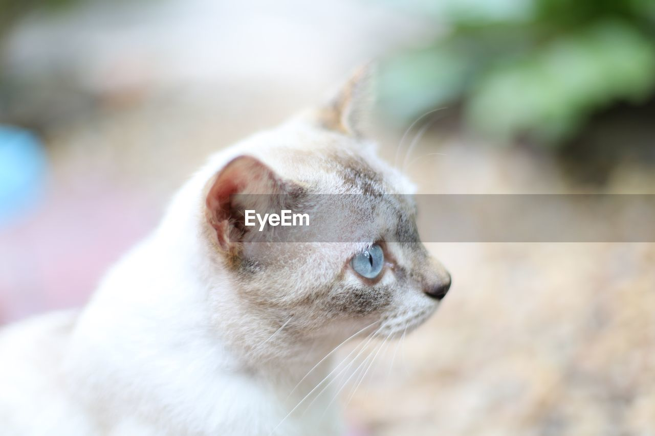 animal themes, mammal, one animal, animal, cat, domestic animals, domestic, domestic cat, feline, pets, vertebrate, focus on foreground, close-up, looking, looking away, animal body part, no people, whisker, day, animal head, animal eye, profile view