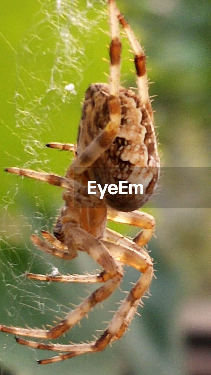 animal themes, spider, animals in the wild, insect, one animal, close-up, focus on foreground, day, no people, nature, outdoors