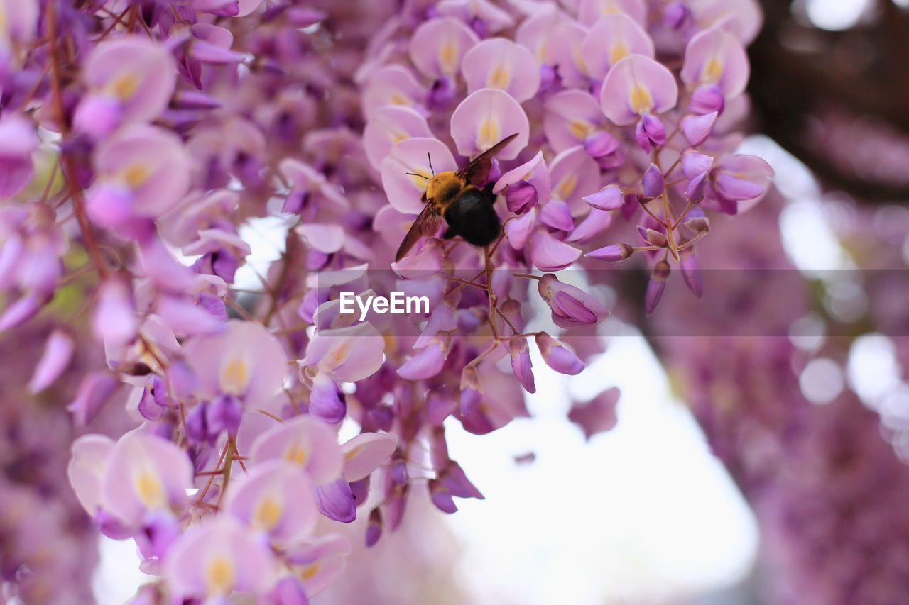 flower, flowering plant, invertebrate, fragility, freshness, insect, one animal, animal themes, petal, beauty in nature, animal, animals in the wild, vulnerability, bee, plant, animal wildlife, close-up, growth, purple, flower head, pollination, no people, pollen
