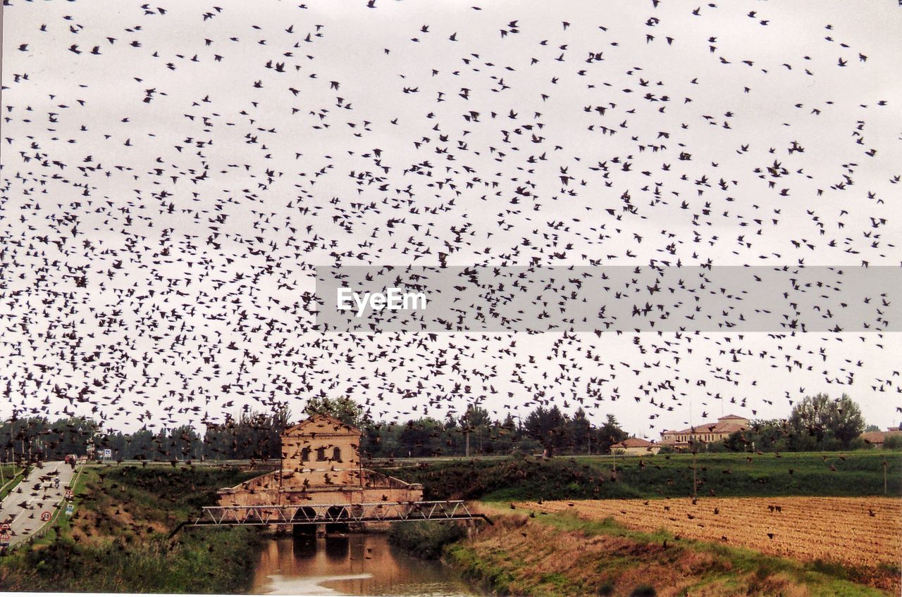 sky, nature, bird, no people, architecture, plant, large group of animals, animal themes, animal, flock of birds, religion, vertebrate, group of animals, day, animals in the wild, built structure, tree, building exterior, belief, flying