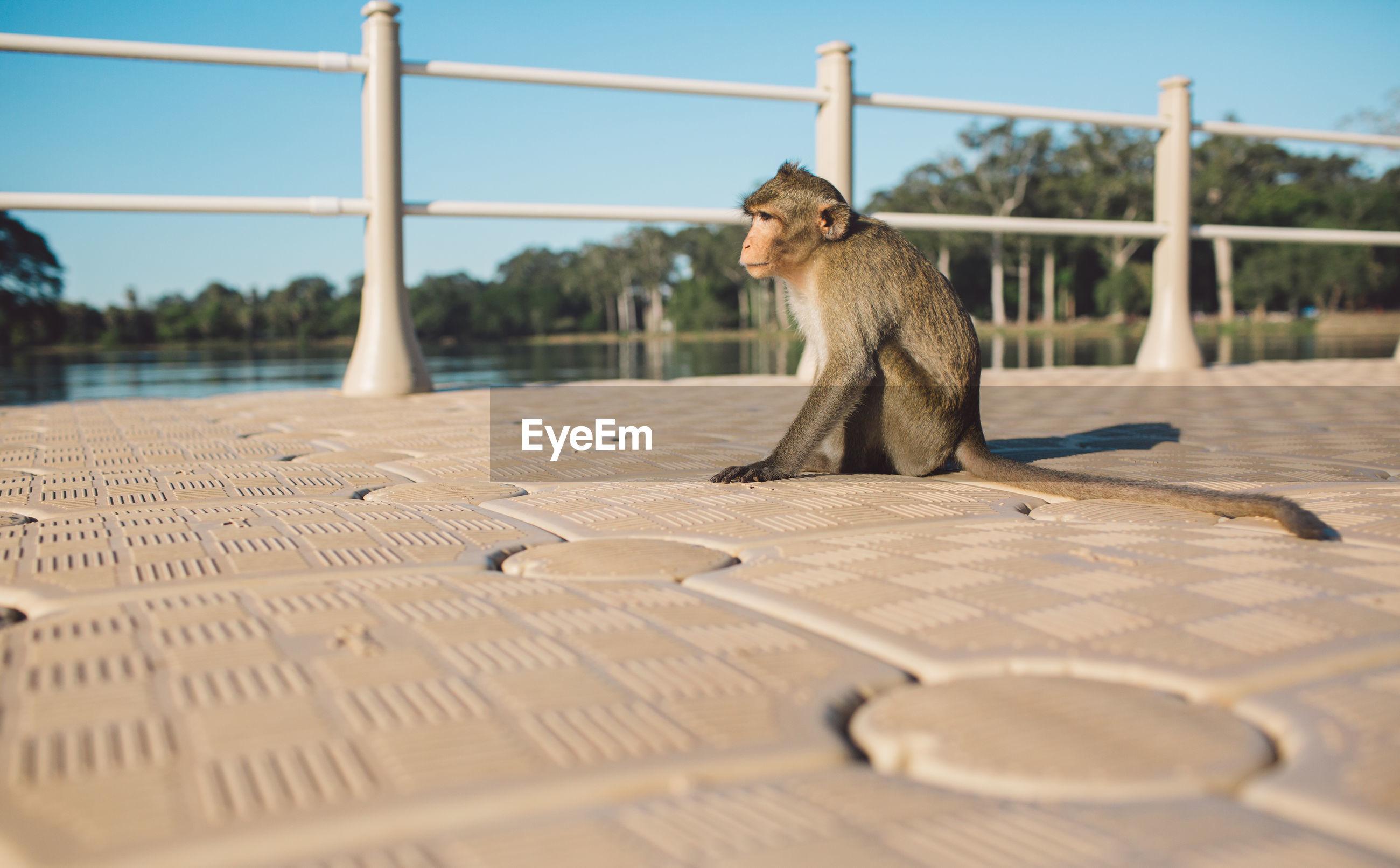 Monkey sitting on footpath against sky