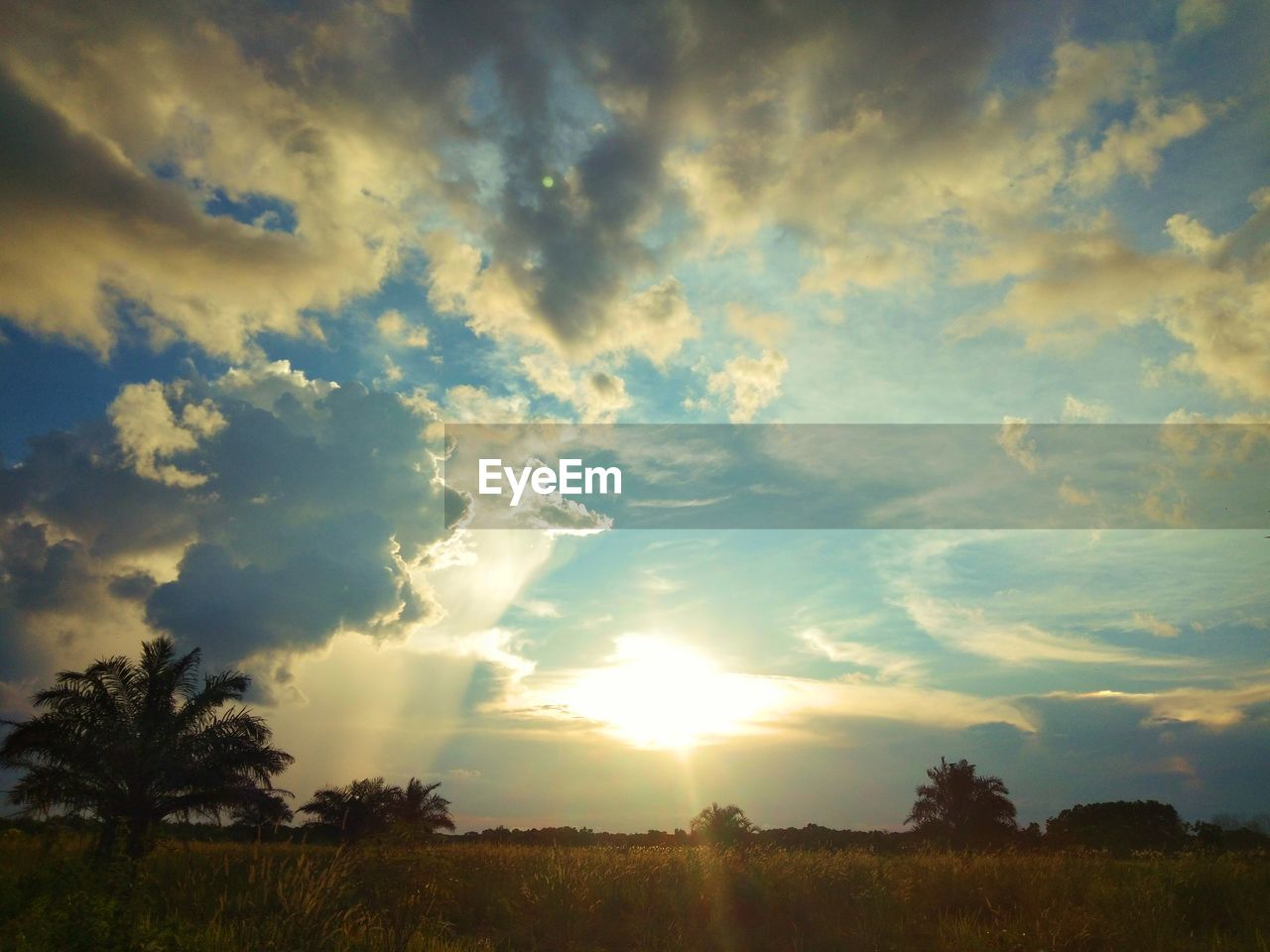 cloud - sky, sky, beauty in nature, scenics - nature, tranquility, tranquil scene, tree, plant, sunset, landscape, nature, environment, no people, non-urban scene, field, land, outdoors, sunlight, idyllic, low angle view