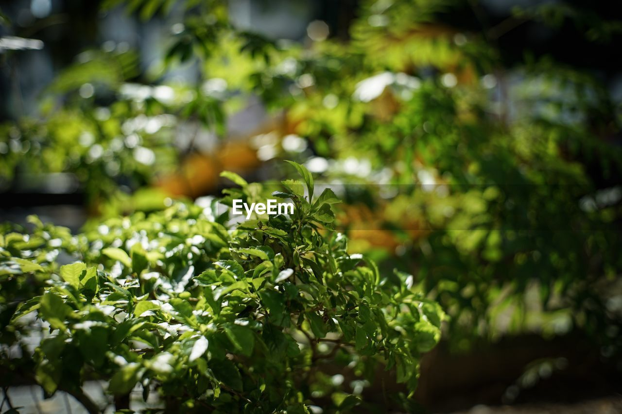 green color, growth, nature, plant, selective focus, focus on foreground, leaf, no people, beauty in nature, freshness, close-up, day, tree, outdoors