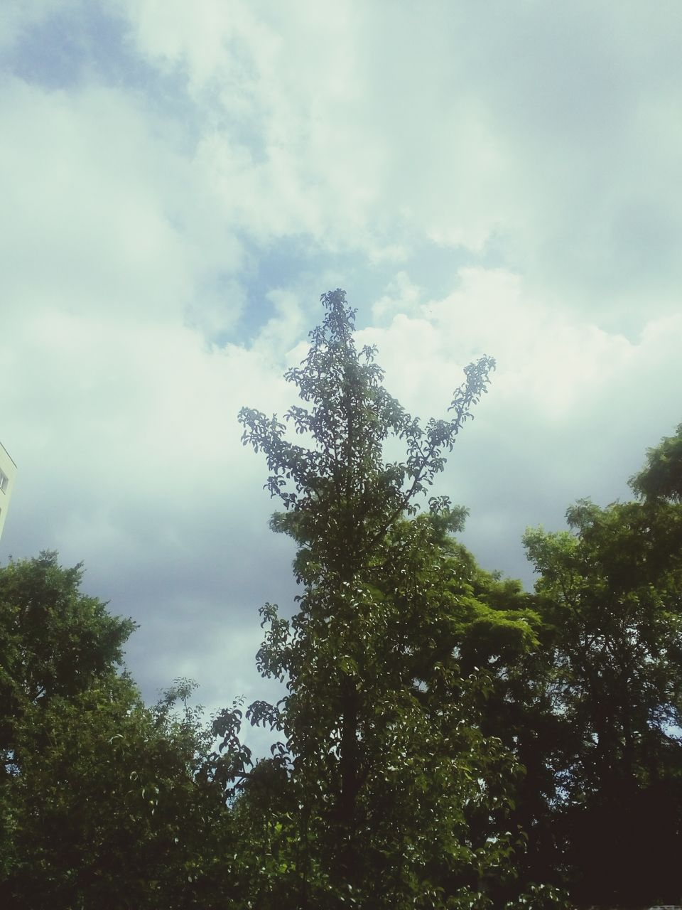tree, nature, sky, low angle view, cloud - sky, day, outdoors, growth, beauty in nature, no people, tranquility, scenics, forest
