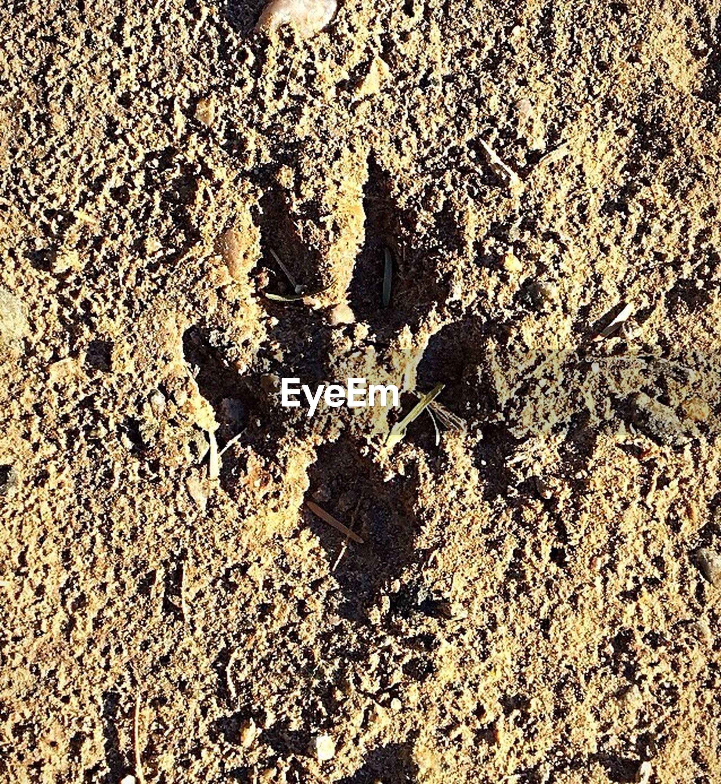 high angle view, nature, no people, day, sand, land, full frame, sunlight, beach, close-up, outdoors, pattern, paw print, textured, footprint, backgrounds, field, animal themes, creativity, animal