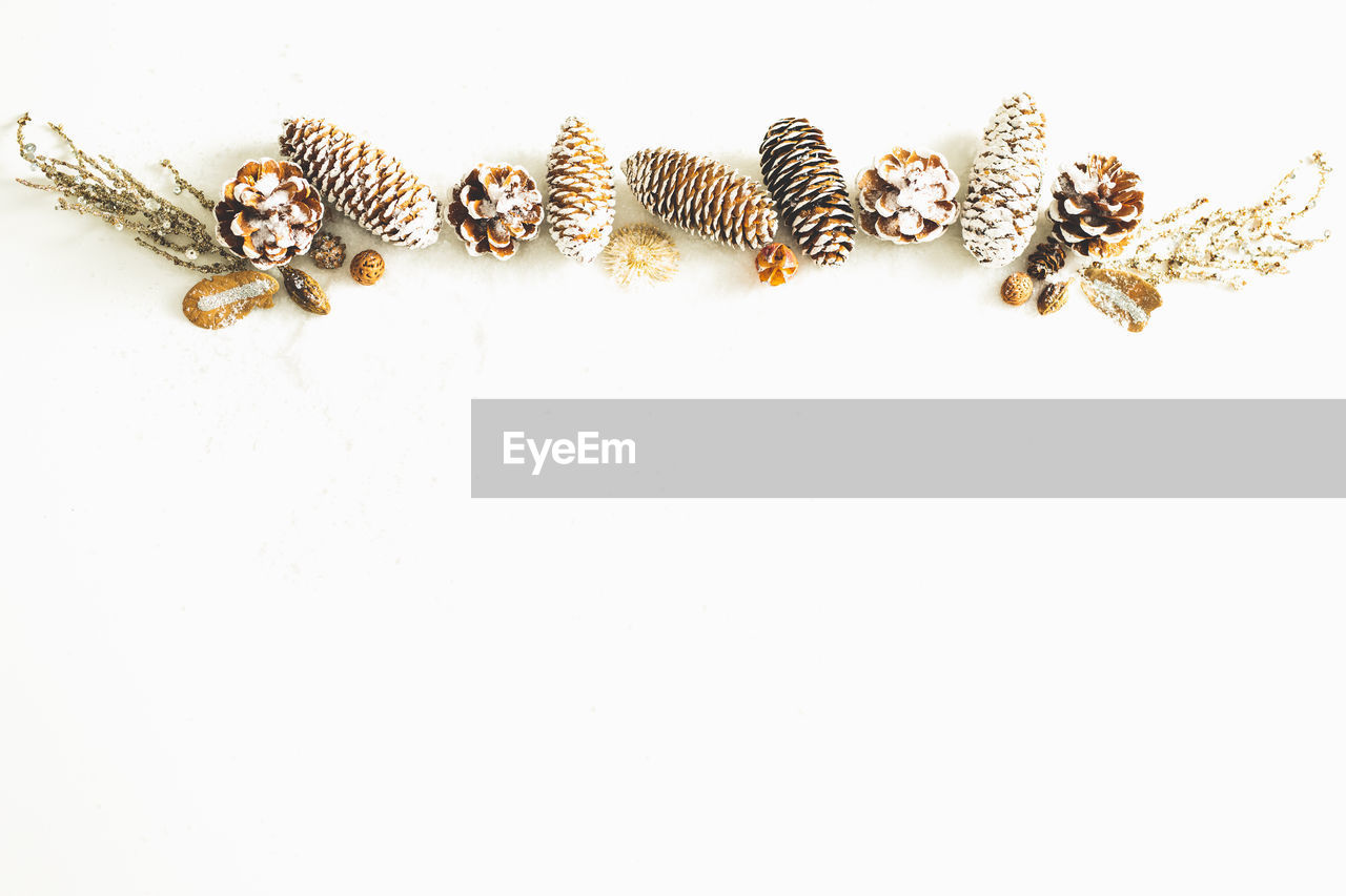 studio shot, animal themes, animal, copy space, white background, animal wildlife, animals in the wild, indoors, close-up, no people, insect, invertebrate, group of animals, high angle view, still life, zoology, cut out, striped, vertebrate