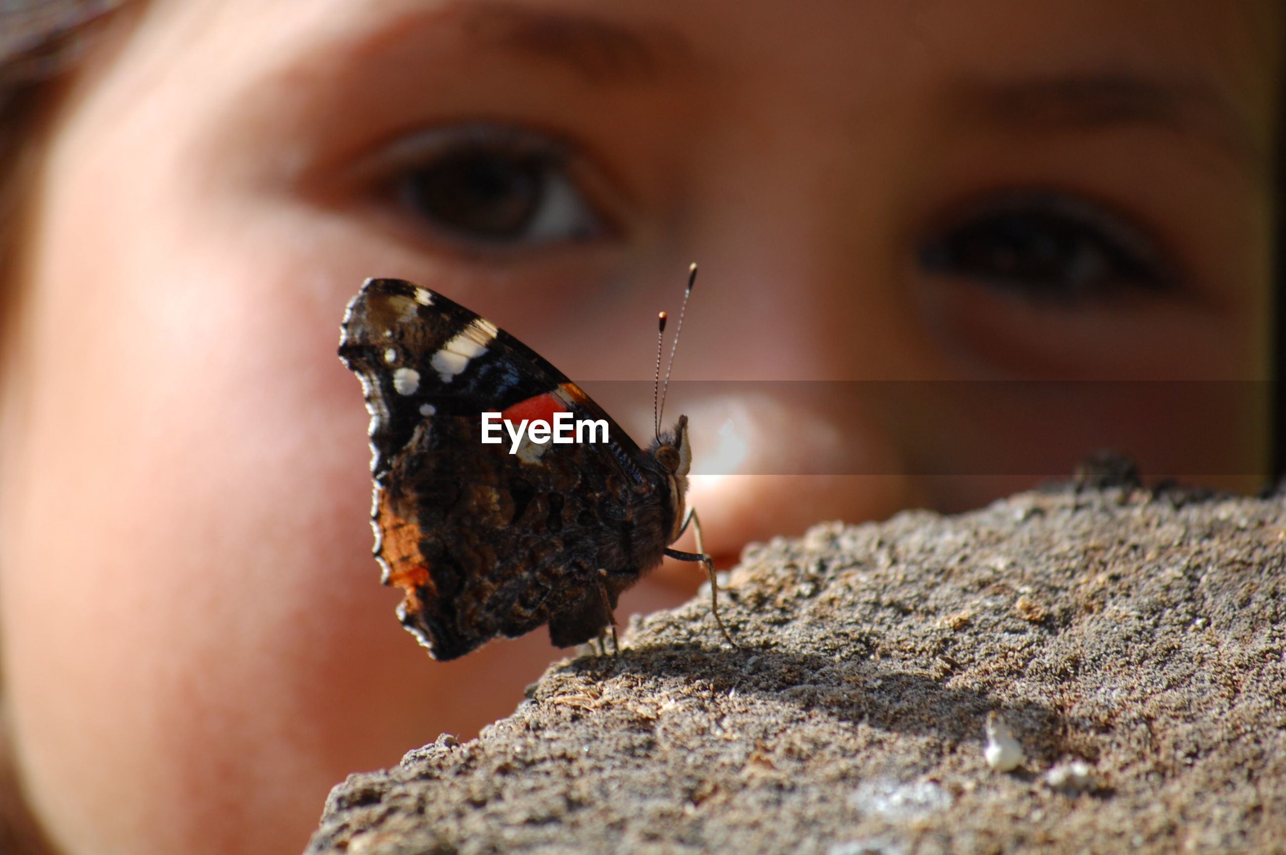 Close-up of girl looking at butterfly on rock