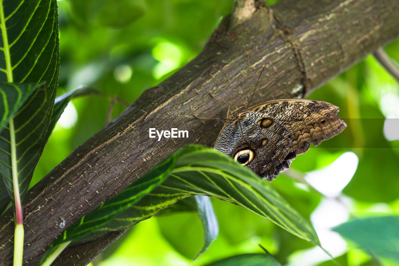 animals in the wild, one animal, animal themes, green color, leaf, nature, animal wildlife, outdoors, day, tree, no people, close-up, focus on foreground, insect, plant, reptile, branch, beauty in nature