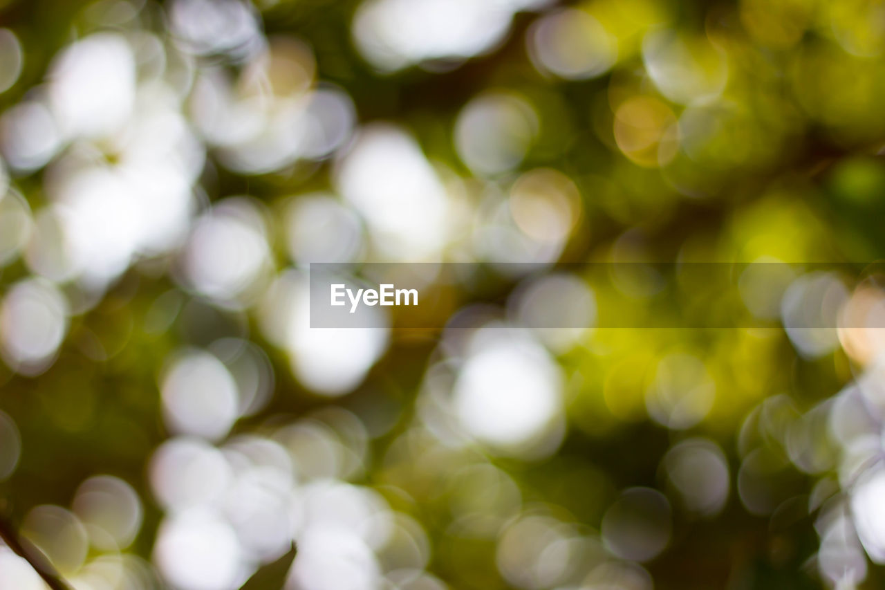 defocused, no people, backgrounds, plant, full frame, day, growth, outdoors, tree, lens flare, nature, beauty in nature, close-up, sunlight, green color, illuminated, shape, selective focus, pattern, glowing
