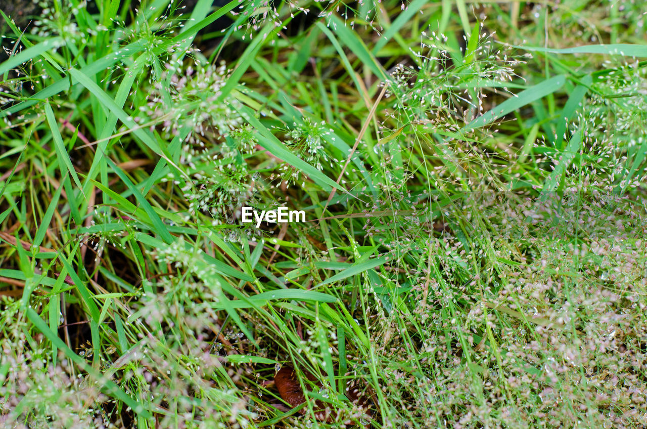green color, plant, growth, land, nature, beauty in nature, field, grass, day, no people, full frame, tranquility, high angle view, outdoors, close-up, freshness, plant part, leaf, selective focus, backgrounds, blade of grass