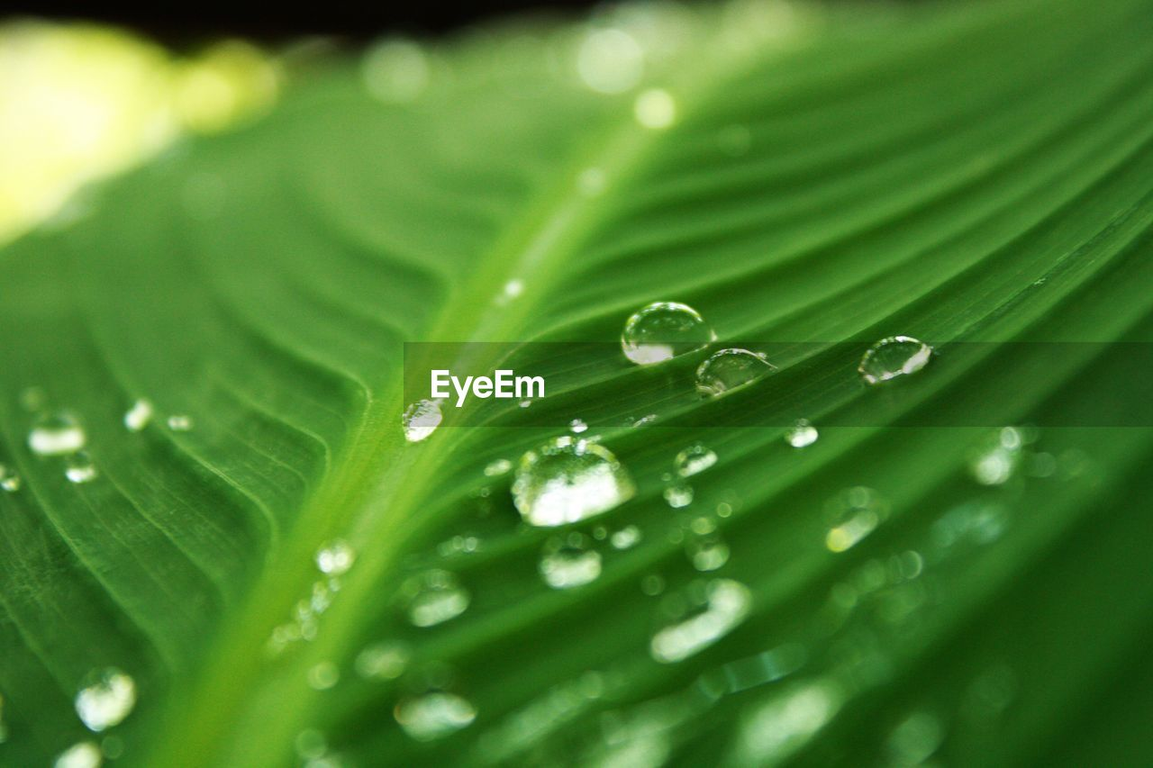 green color, drop, wet, leaf, plant part, close-up, plant, water, freshness, growth, beauty in nature, selective focus, no people, nature, day, full frame, leaves, fragility, vulnerability, purity, outdoors, rain, dew, raindrop, blade of grass