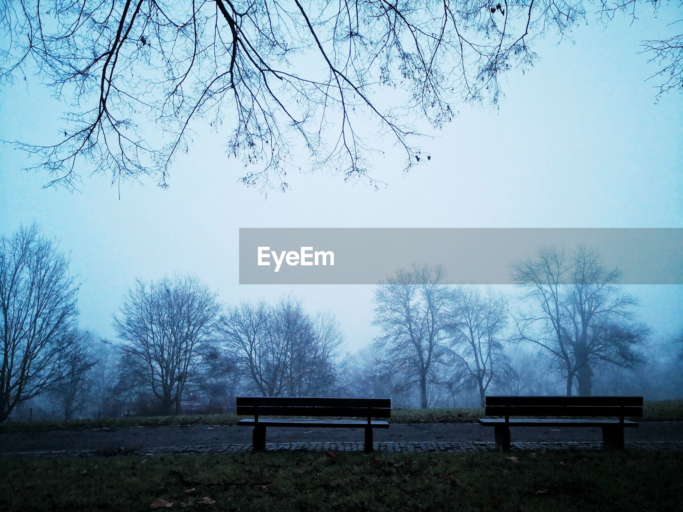 BENCH AGAINST BARE TREES IN PARK