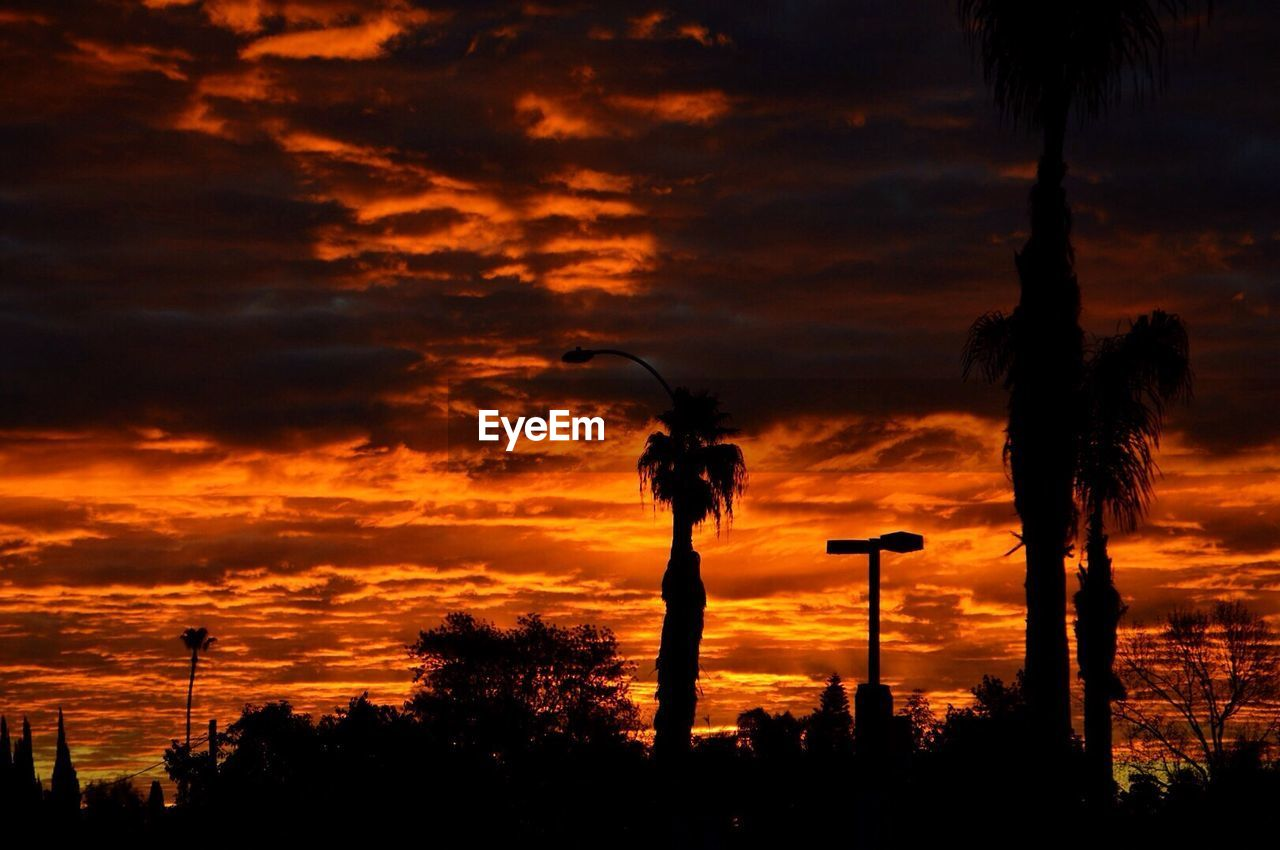 sunset, tree, silhouette, cloud - sky, sky, orange color, nature, beauty in nature, scenics, palm tree, outdoors, tranquil scene, tranquility, tree trunk, no people, growth, low angle view, animal themes, bird, day
