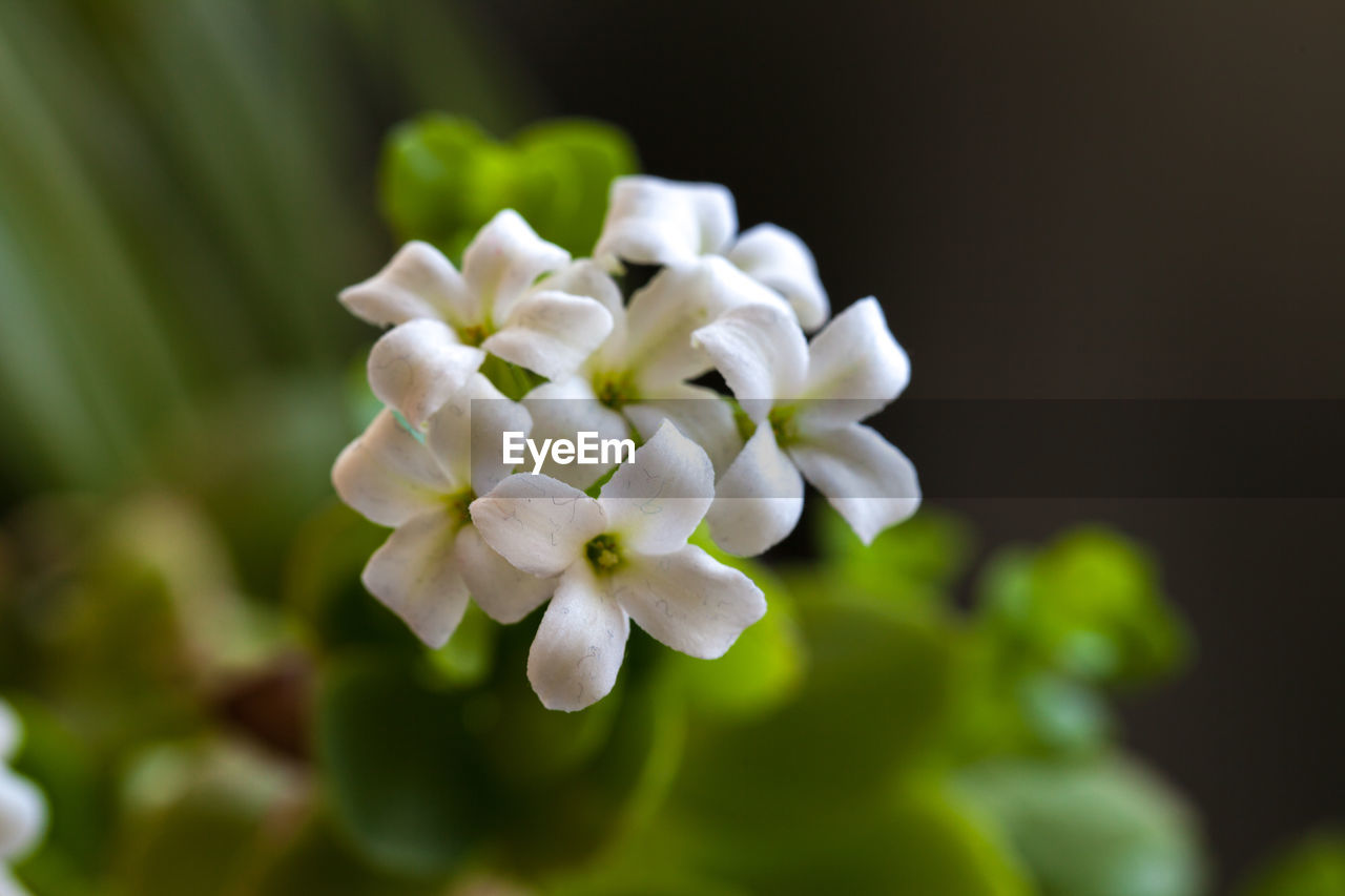 flower, nature, white color, beauty in nature, petal, fragility, growth, plant, focus on foreground, no people, freshness, close-up, green color, flower head, blooming, day, outdoors