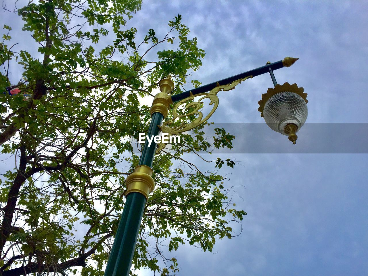 low angle view, tree, plant, sky, nature, growth, no people, day, cloud - sky, lighting equipment, branch, outdoors, green color, beauty in nature, light bulb, street light, hanging, animal, sunlight, built structure