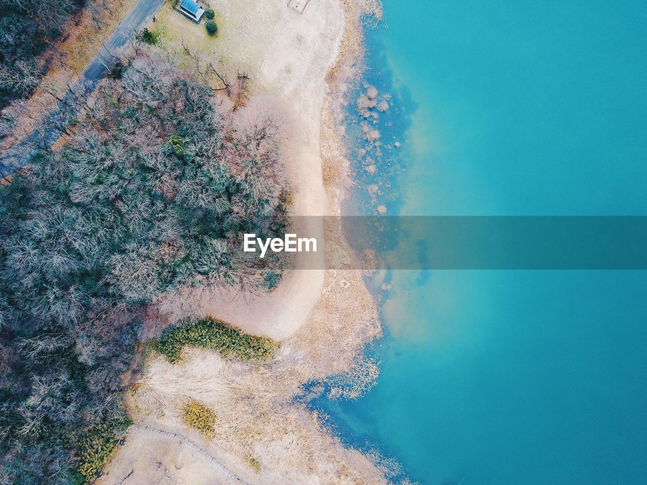 High angle view of trees at beach by blue sea