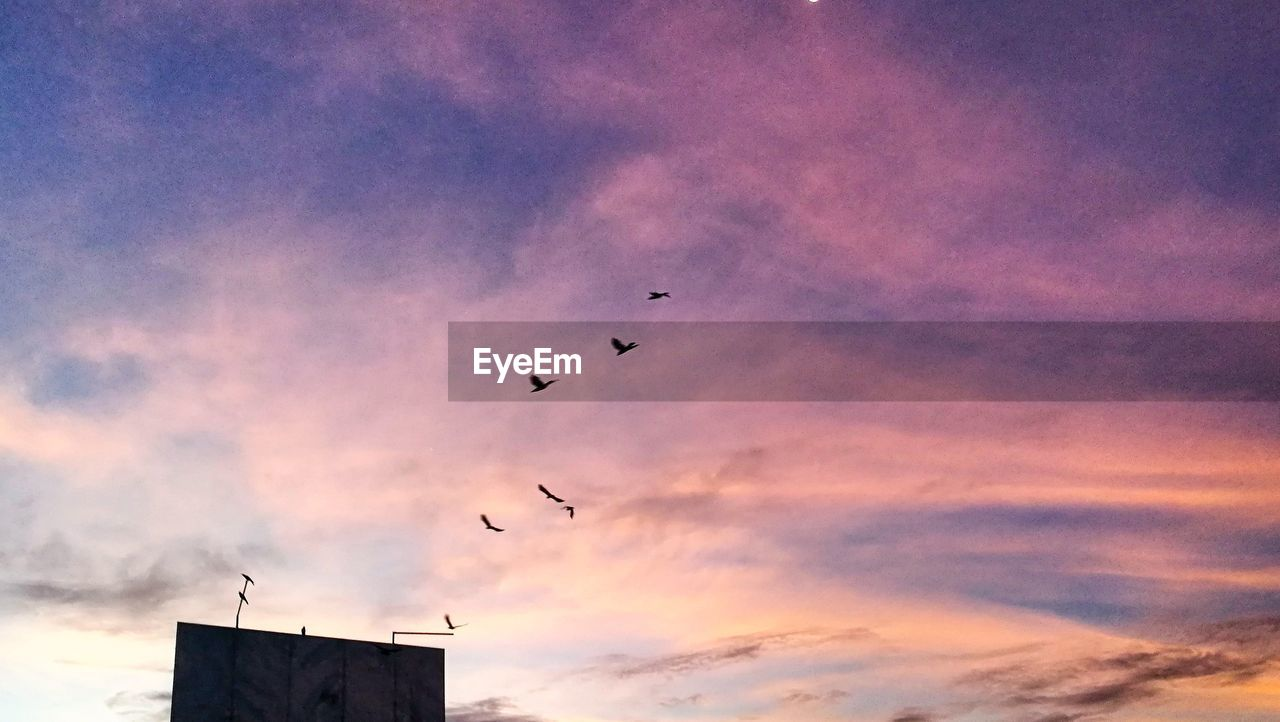sunset, bird, silhouette, flying, low angle view, sky, cloud - sky, animals in the wild, outdoors, animal themes, beauty in nature, flock of birds, no people, mid-air, nature, animal wildlife, built structure, scenics, architecture, large group of animals, day