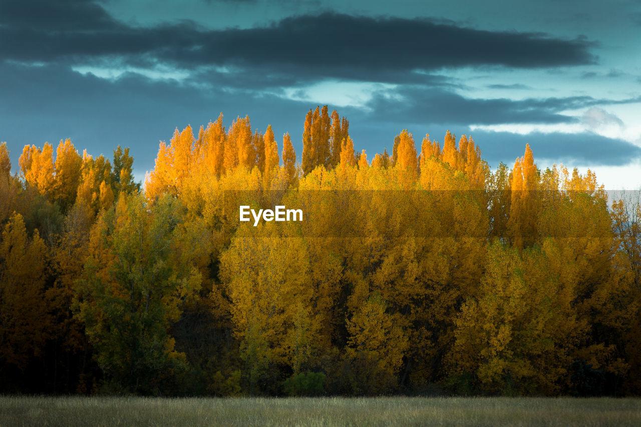 View of yellow autumn trees