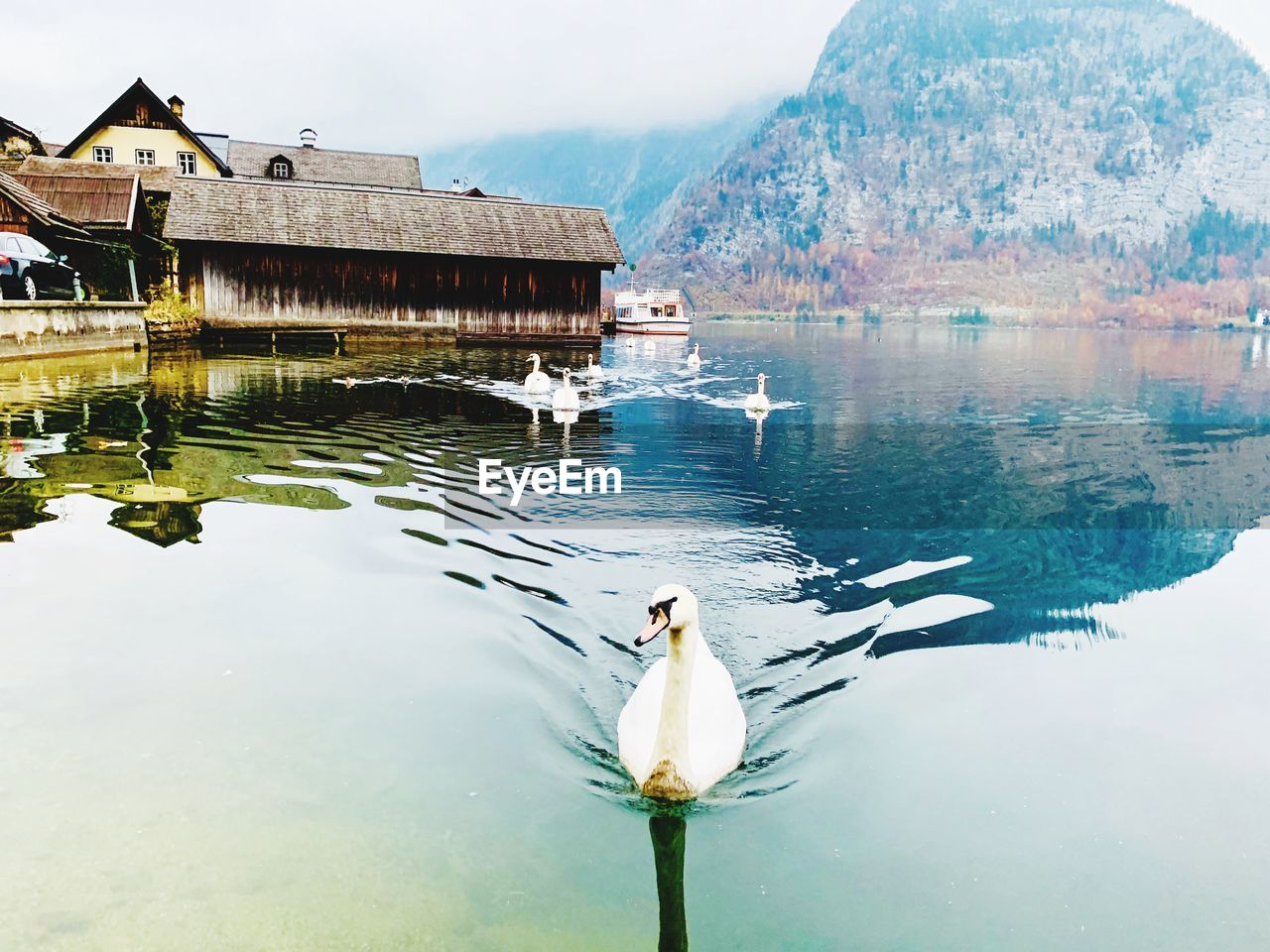 water, lake, reflection, vertebrate, animals in the wild, architecture, bird, animal wildlife, built structure, animal themes, animal, building exterior, nature, day, waterfront, no people, swimming, sky, swan