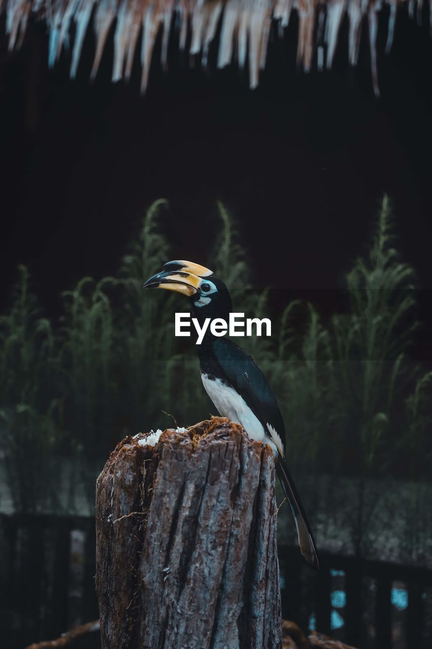 BIRD ON WOODEN POST
