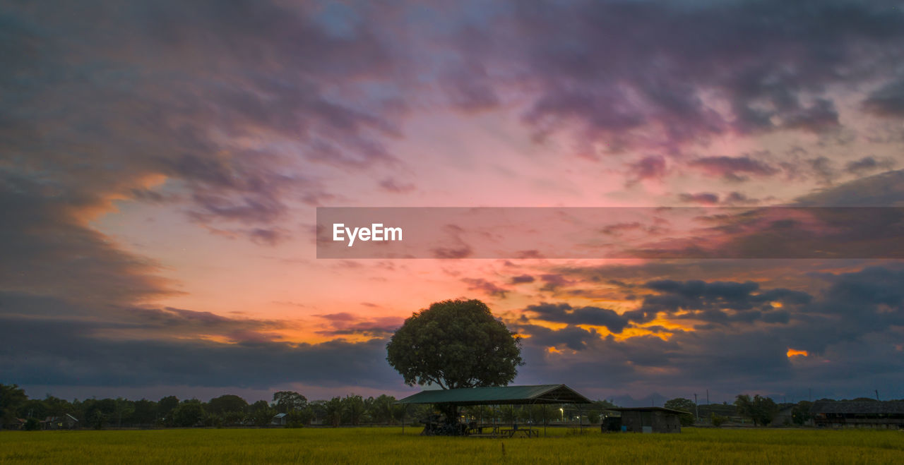 sunset, sky, cloud - sky, beauty in nature, scenics - nature, plant, tranquil scene, orange color, landscape, environment, tranquility, tree, field, no people, nature, land, non-urban scene, rural scene, green color, idyllic, outdoors