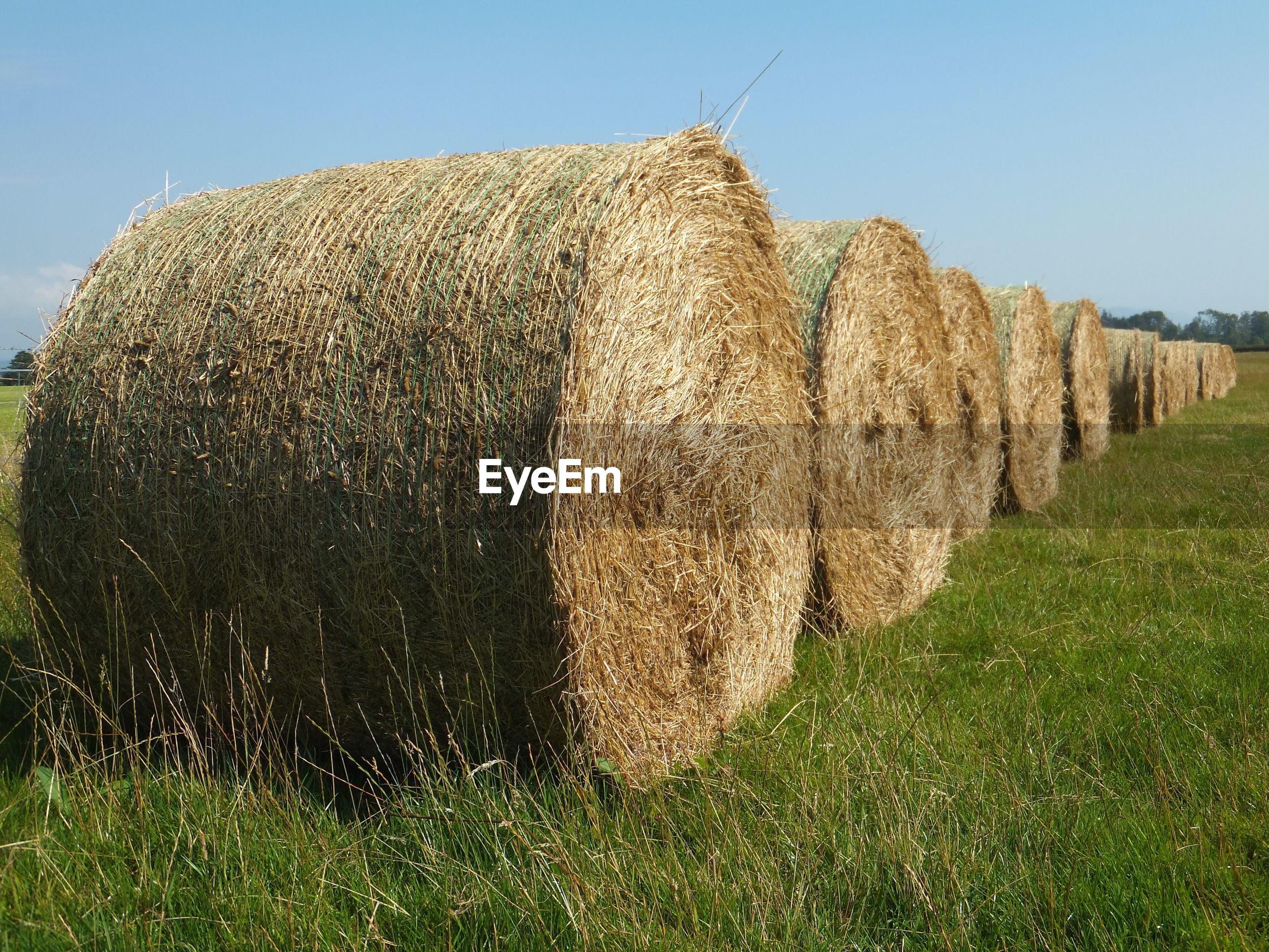 Hay bales on grassy field