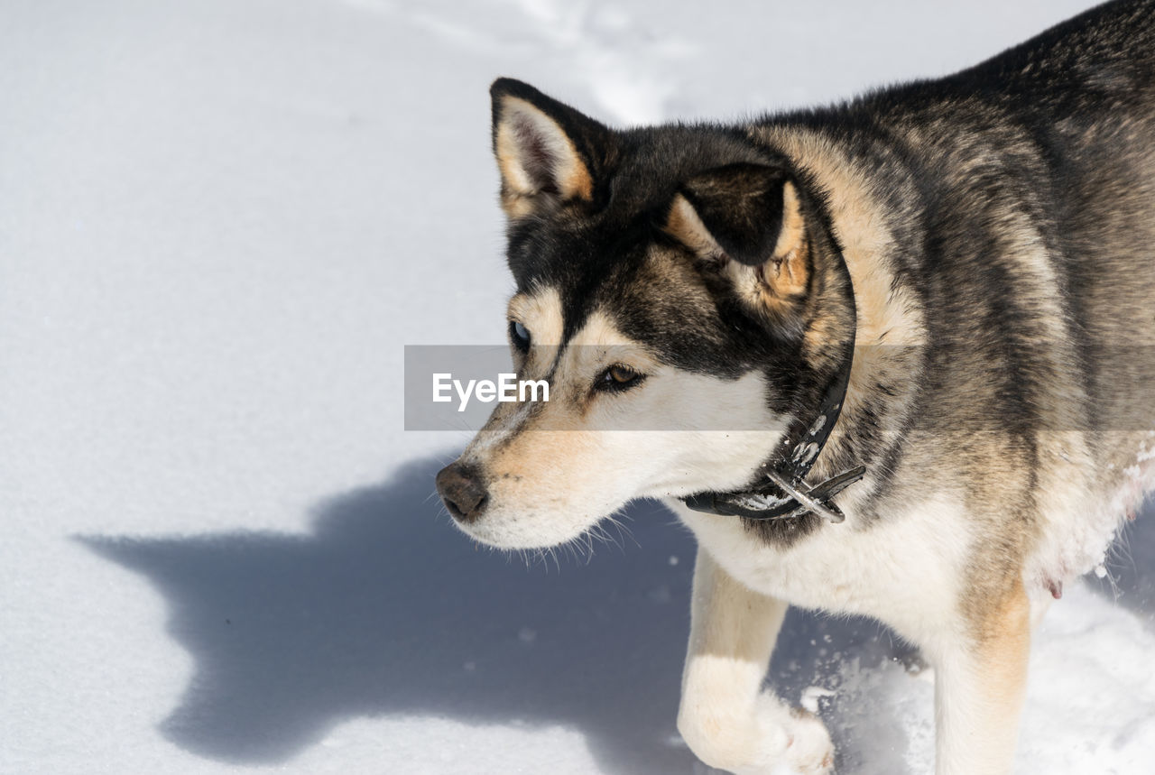 Close-up of dog on snowy field