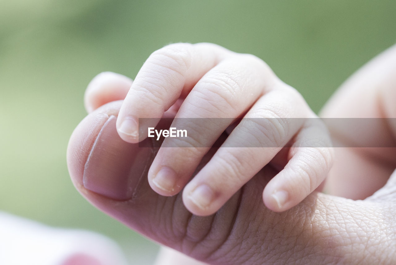 Cropped Image Of Baby Holding Mother Thumb