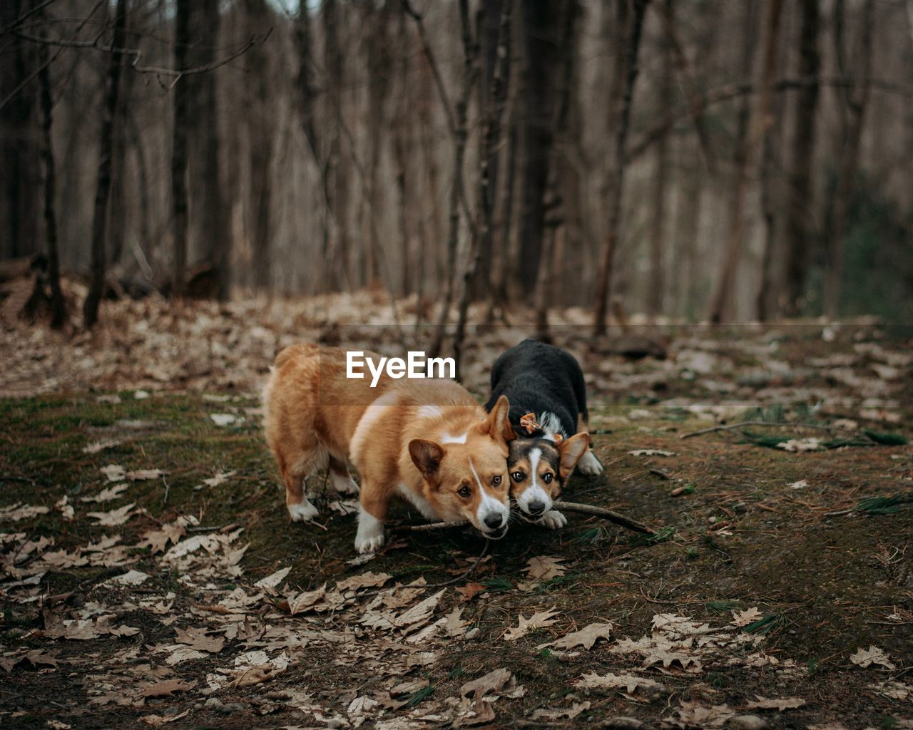 mammal, animal themes, animal, one animal, domestic animals, domestic, pets, land, tree, vertebrate, dog, canine, forest, nature, no people, plant, day, field, full length, woodland, outdoors, purebred dog